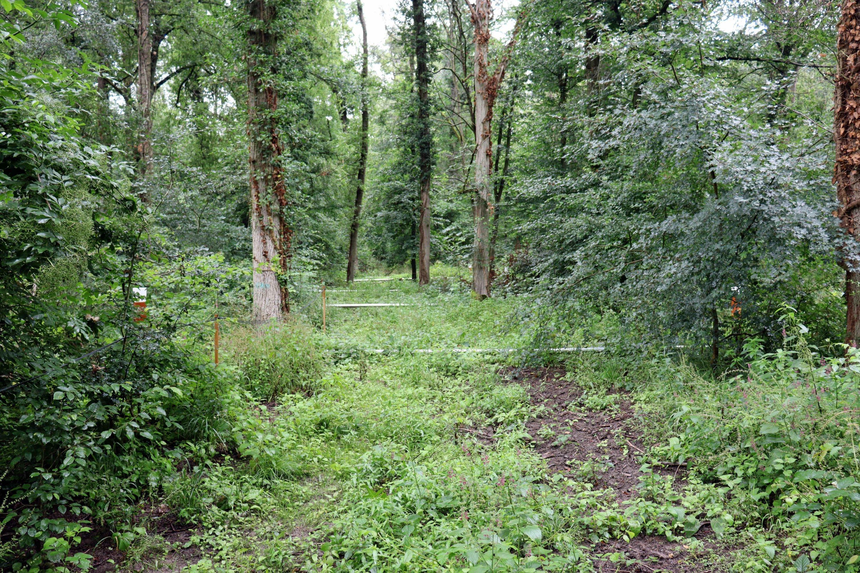 Auf dem Boden eines Waldes sind parallel in mehreren Metern Abstand Bewässerungsrohre verlegt.