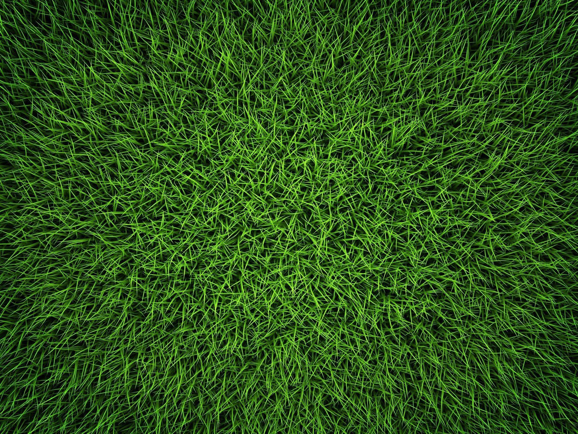 Gras von oben fotografiert, kein Blümlein zu sehen