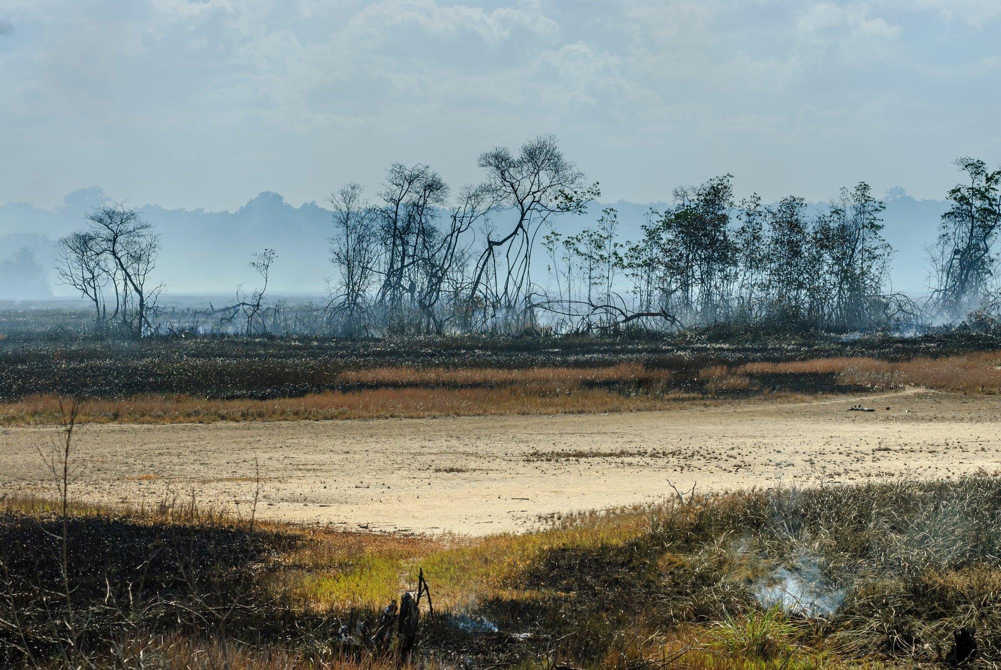Durch Brand zerstörter Mangrovenwald, nur noch Reste sind zu sehen.
