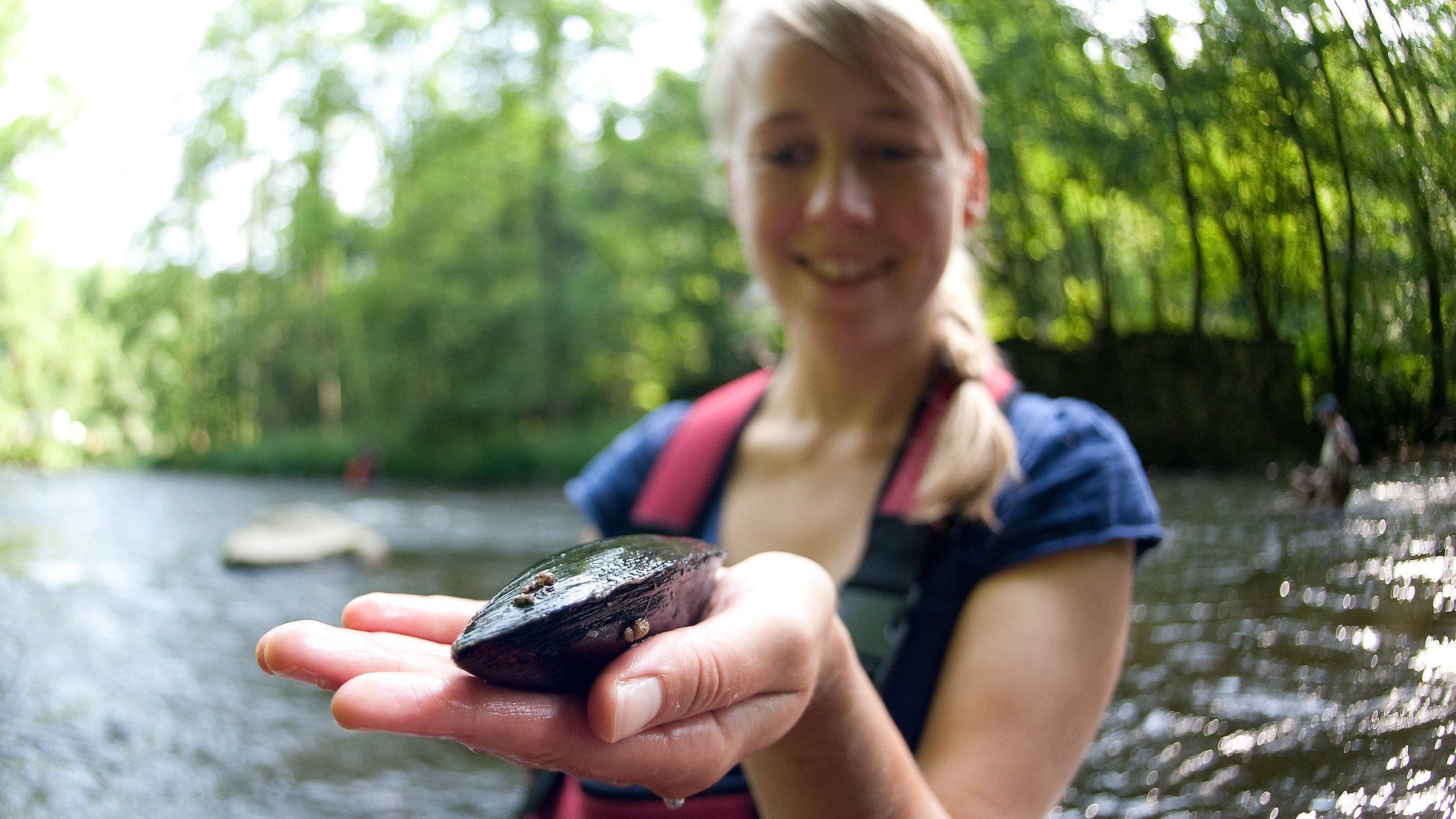 Eine junge Wissenschaftlerin steht in einem Fluss und hält eine Flussperlmuschel auf ihrer geöffneten Handfläche.