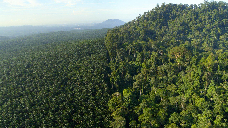Das Bild ist in zwei scharfe Hälften geteilt, links eine industrielle Palmölplantage, rechts tropischer Regenwald.