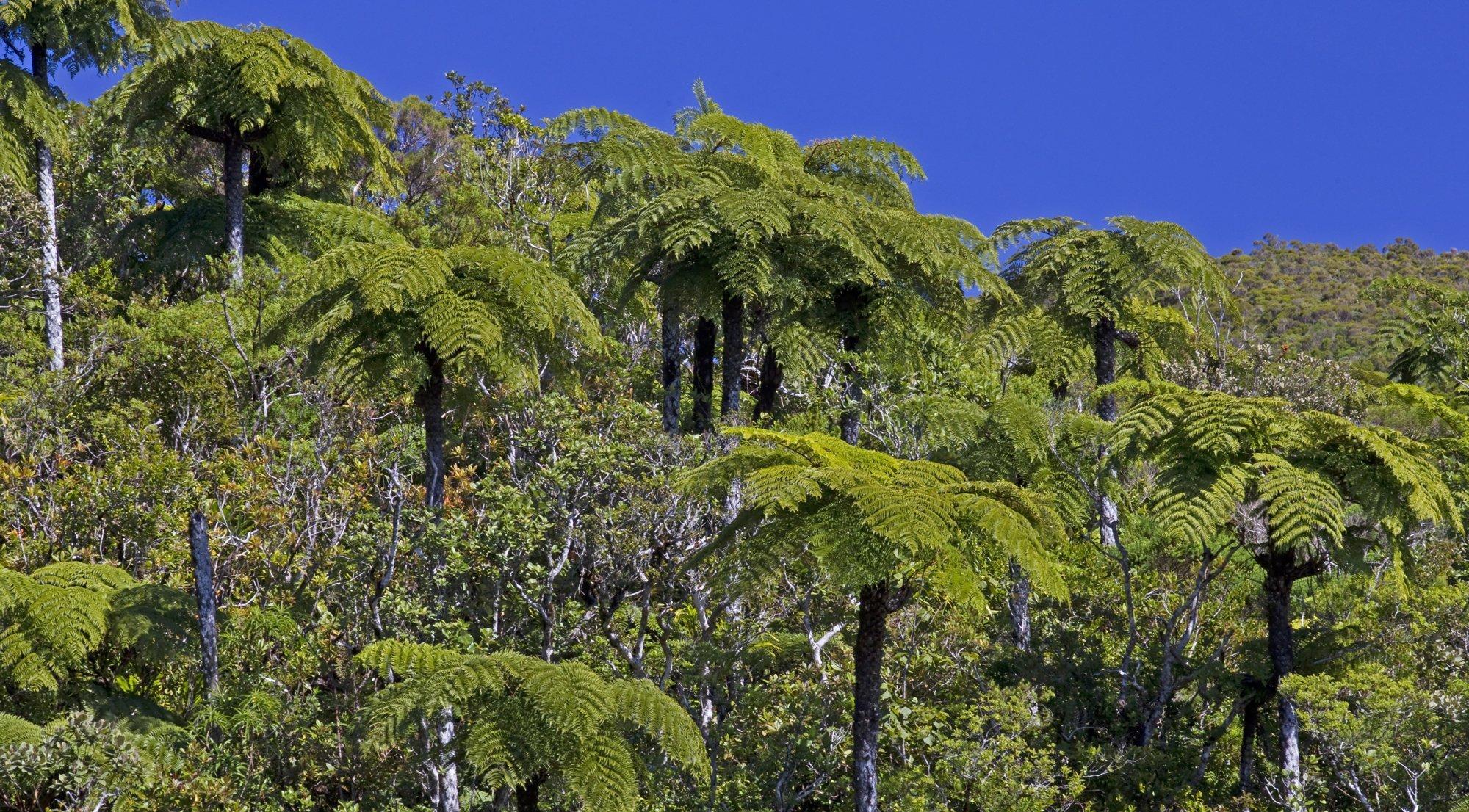 Ein Landschaftsfoto des tropischen Regenwalds auf La Reunion