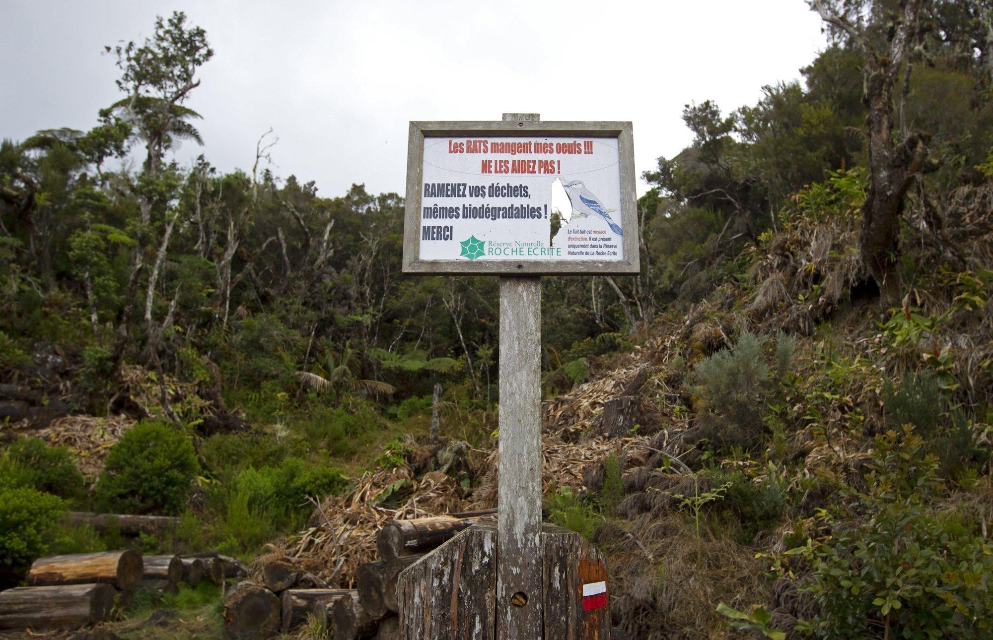 """Ein Hinweisschild mit der französischen Inschrift:. """"Die Ratten fressen meine Eier!!! Helfen Sie ihnen nicht"""", """"Nehmen Sie Ihren Abfall mit, auch Bioabfall"""" in einem Brutgebiet des Tuit Tuit auf La Reunion"""
