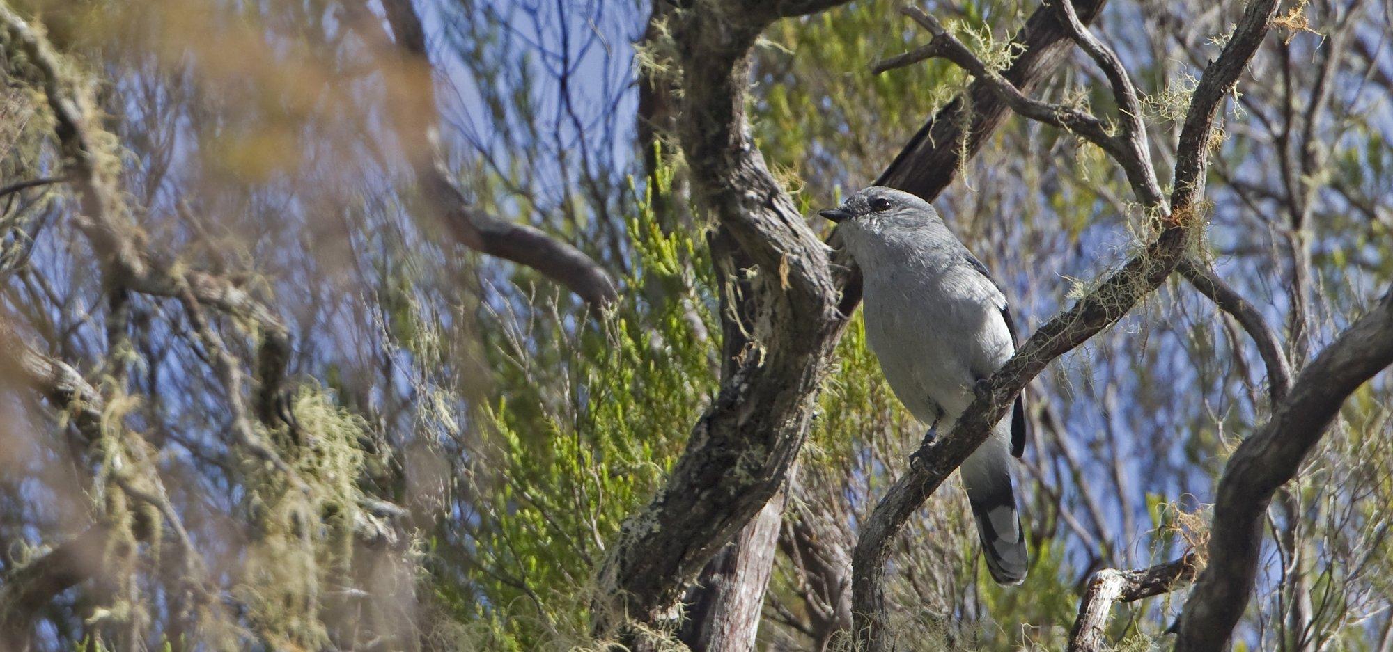 Ein Newton-Raupenfänger sitzt in einem Busch
