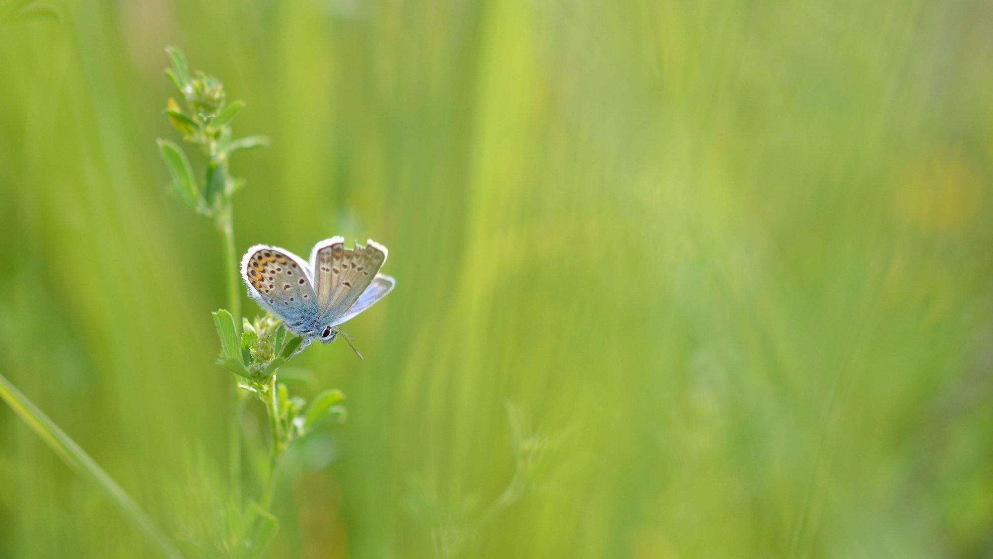 Ein schön gemusterter Schmetterling sitzt auf einer Pflanze