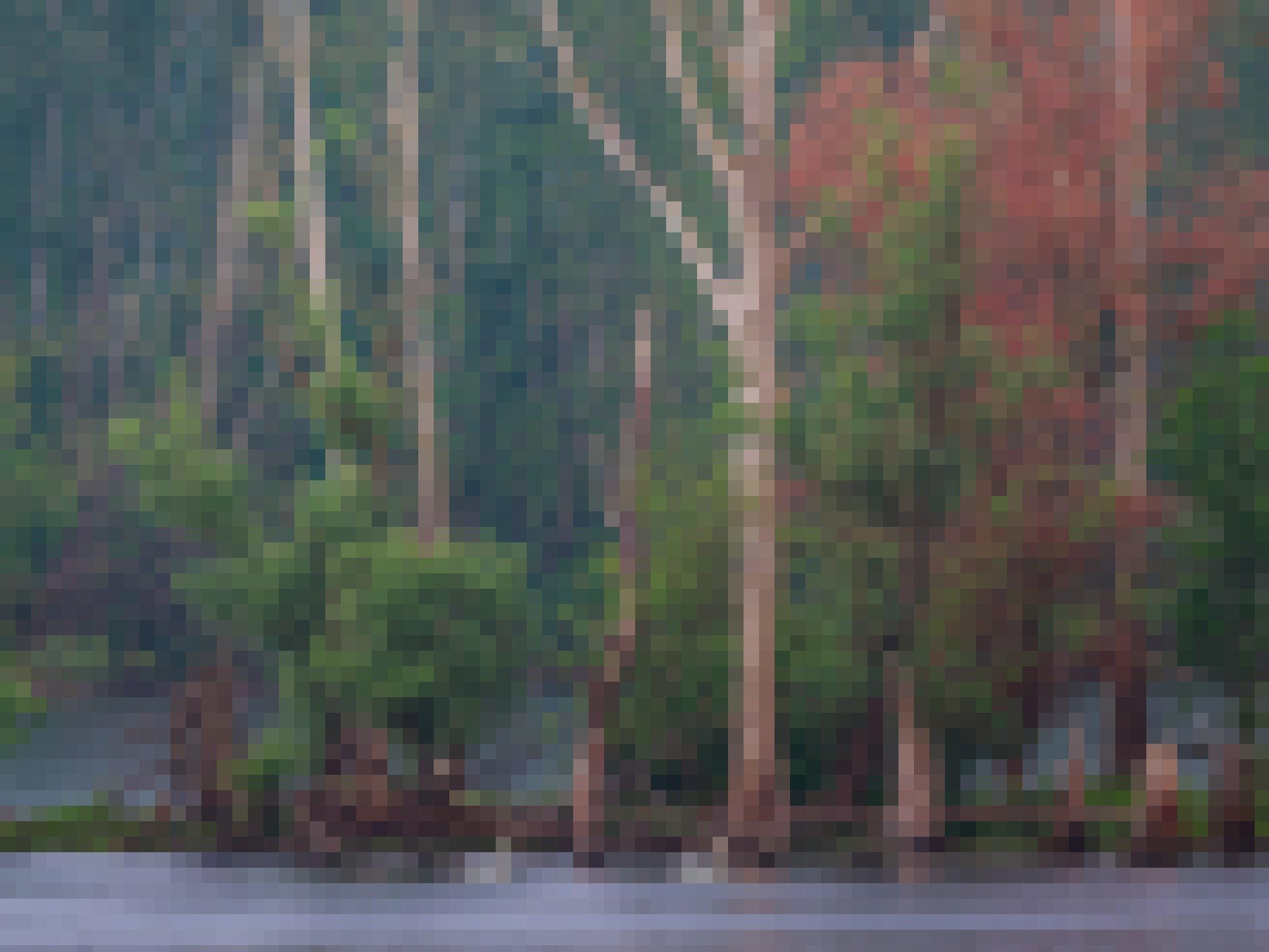 Seenlandschaft auf der Bislicher Insel mit Bäumen, die z.T. im Wasser stehen.