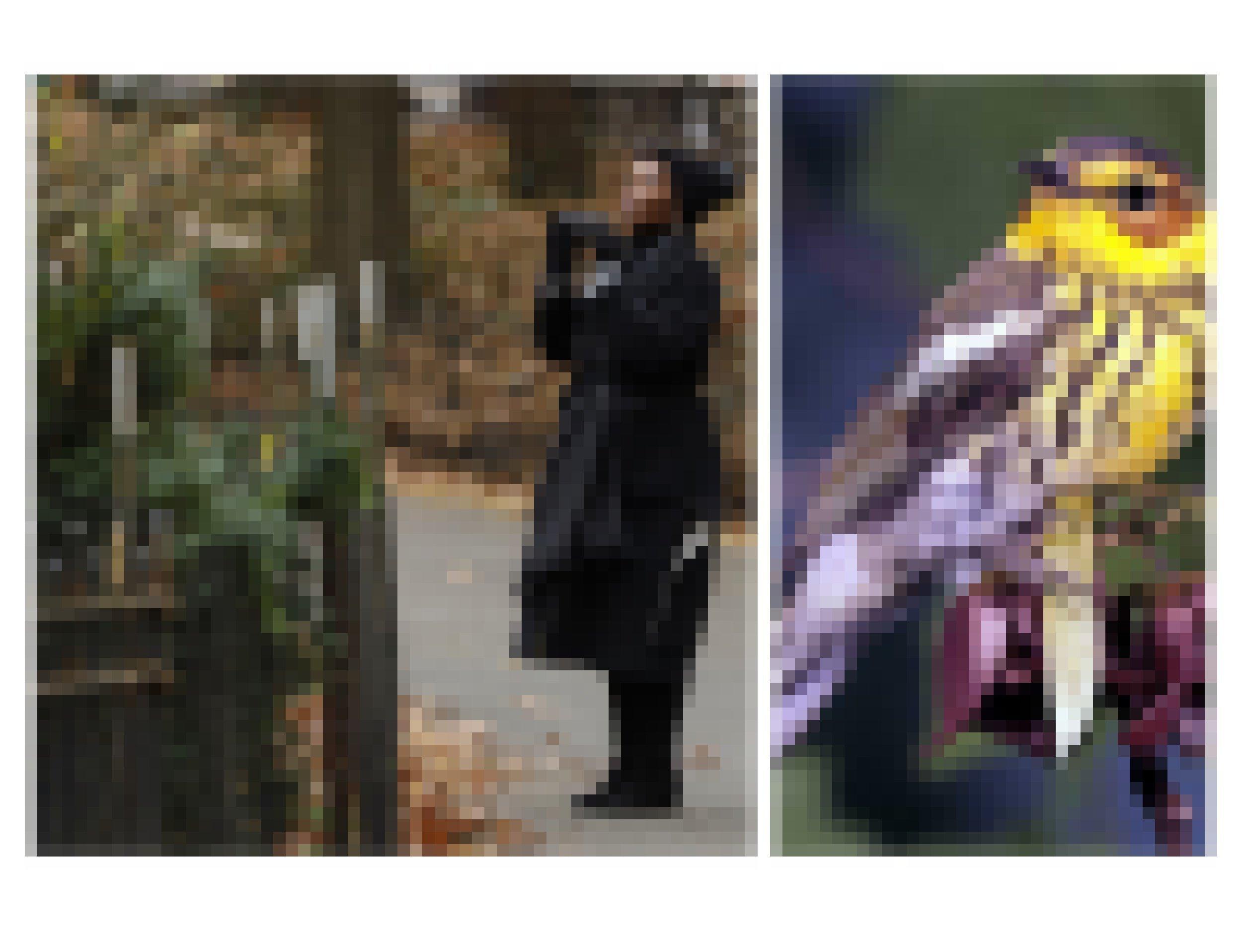 Anne, eine schwarze Frau, im Park mit Fernglas. Der Waldsänger im Portrait, ein gelb-brauner Singvogel.