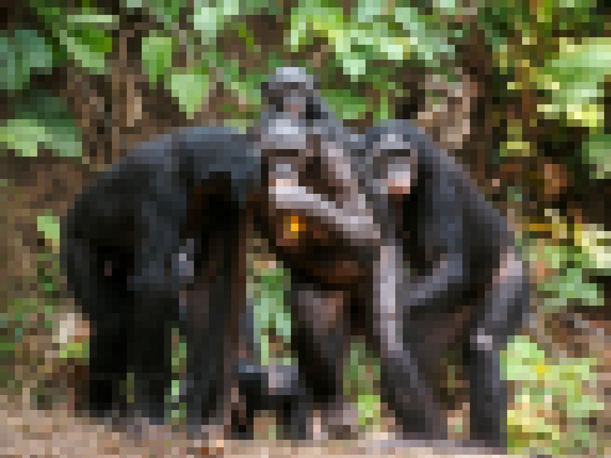 Auf dem Bild zu sehen ist eine Gruppe Bonobos in halb aufrechter Haltung, aufgenommen im Dschungel in der Republik Kongo. Ein Weibchen trägt ein Jungtier auf dem Rücken und hält Futter in der Hand. Möglicherweise, so eine These, entstand der aufrechte Gang einst, weil Menschenaffen so besser Kinder transportieren oder Nahrung für andere herbeischaffen konnten.