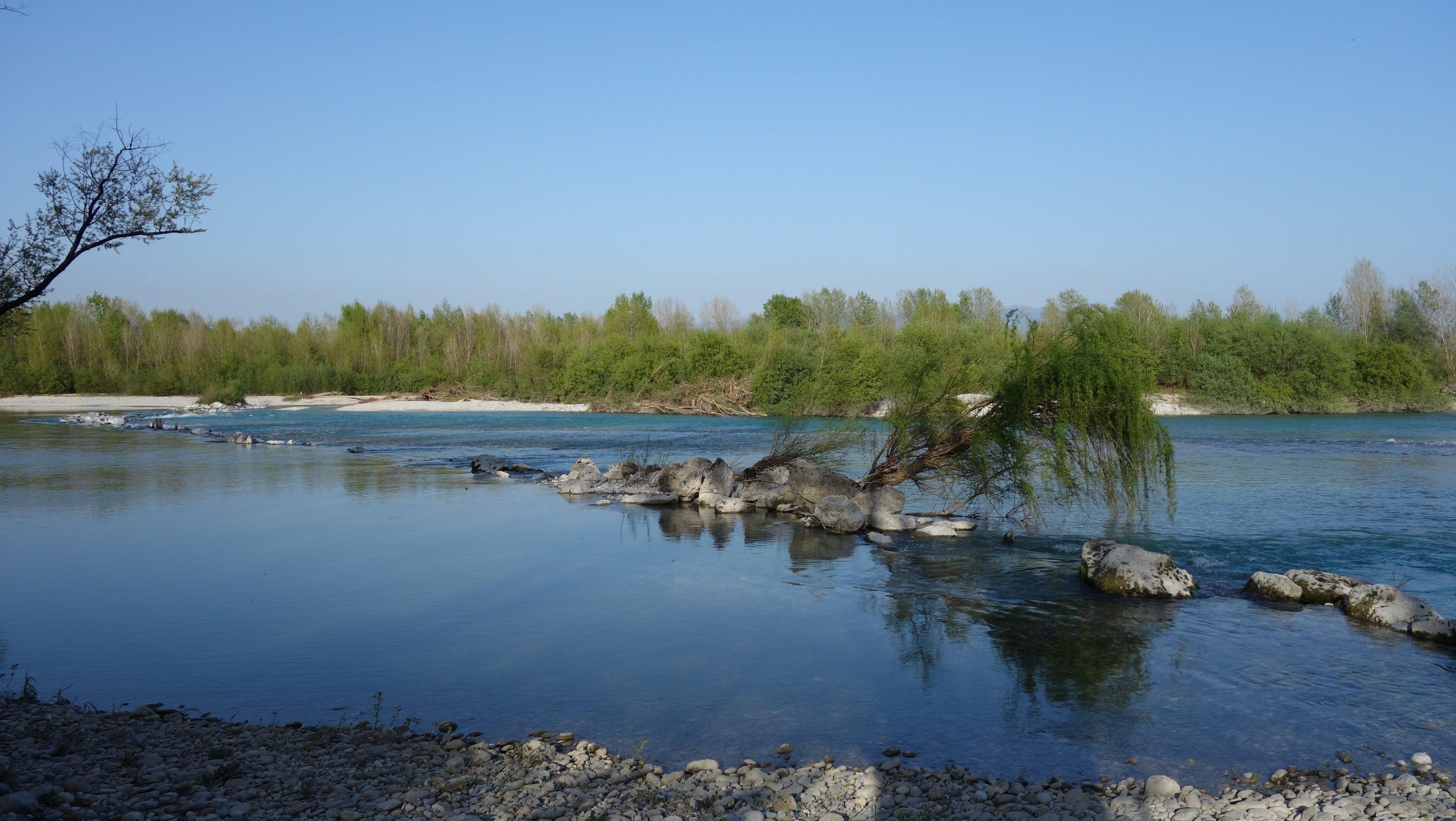 eher ruhiger Fluss, Steine in der Mitte, ein kleiner Baum, im Hintergrund viele Bäume