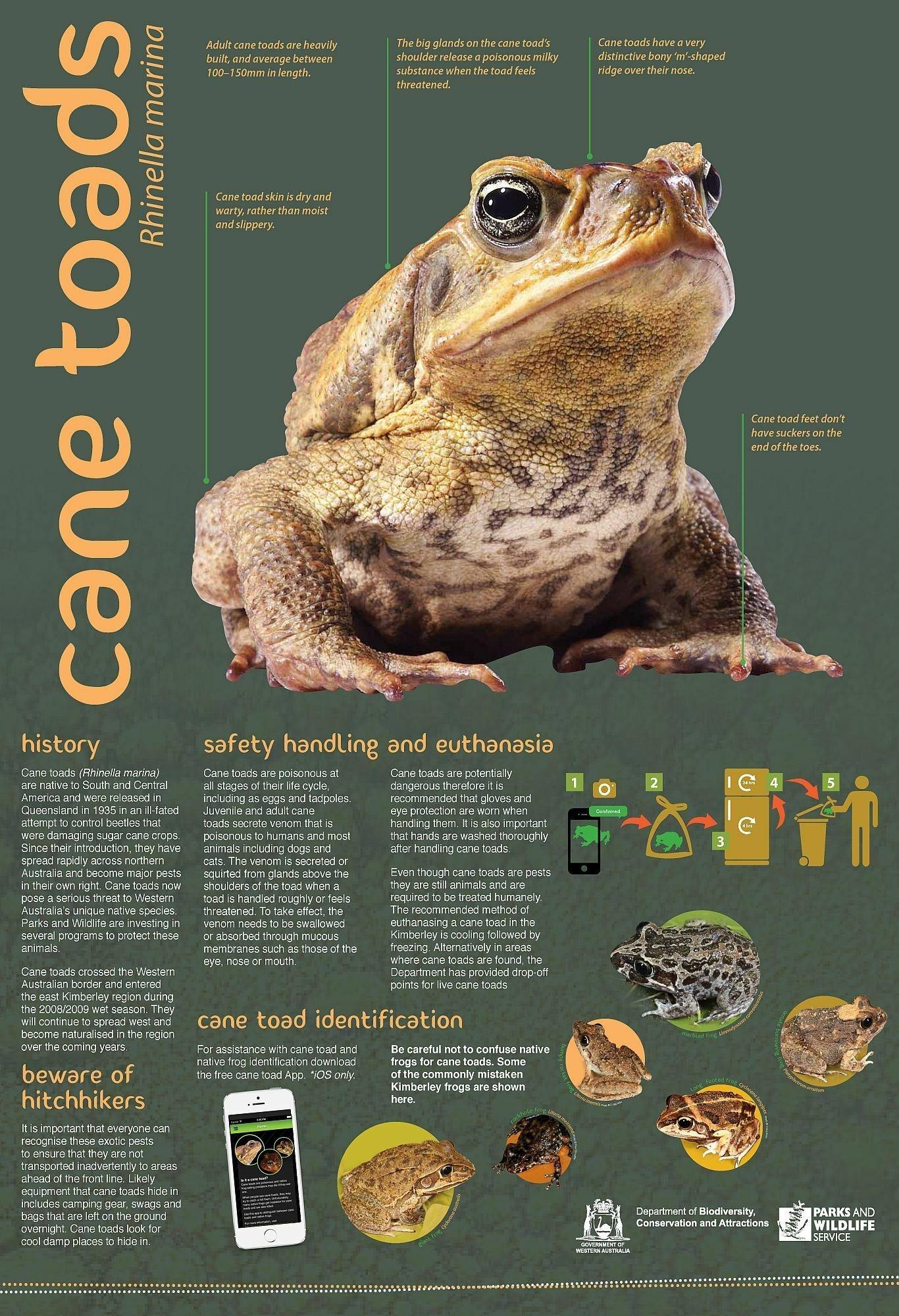 Ein Poster der australischen Cane Toad Coalition erklärt, wie Aga-Kröten zu identifizieren, handhaben und im Gefrierschrank zu töten sind.
