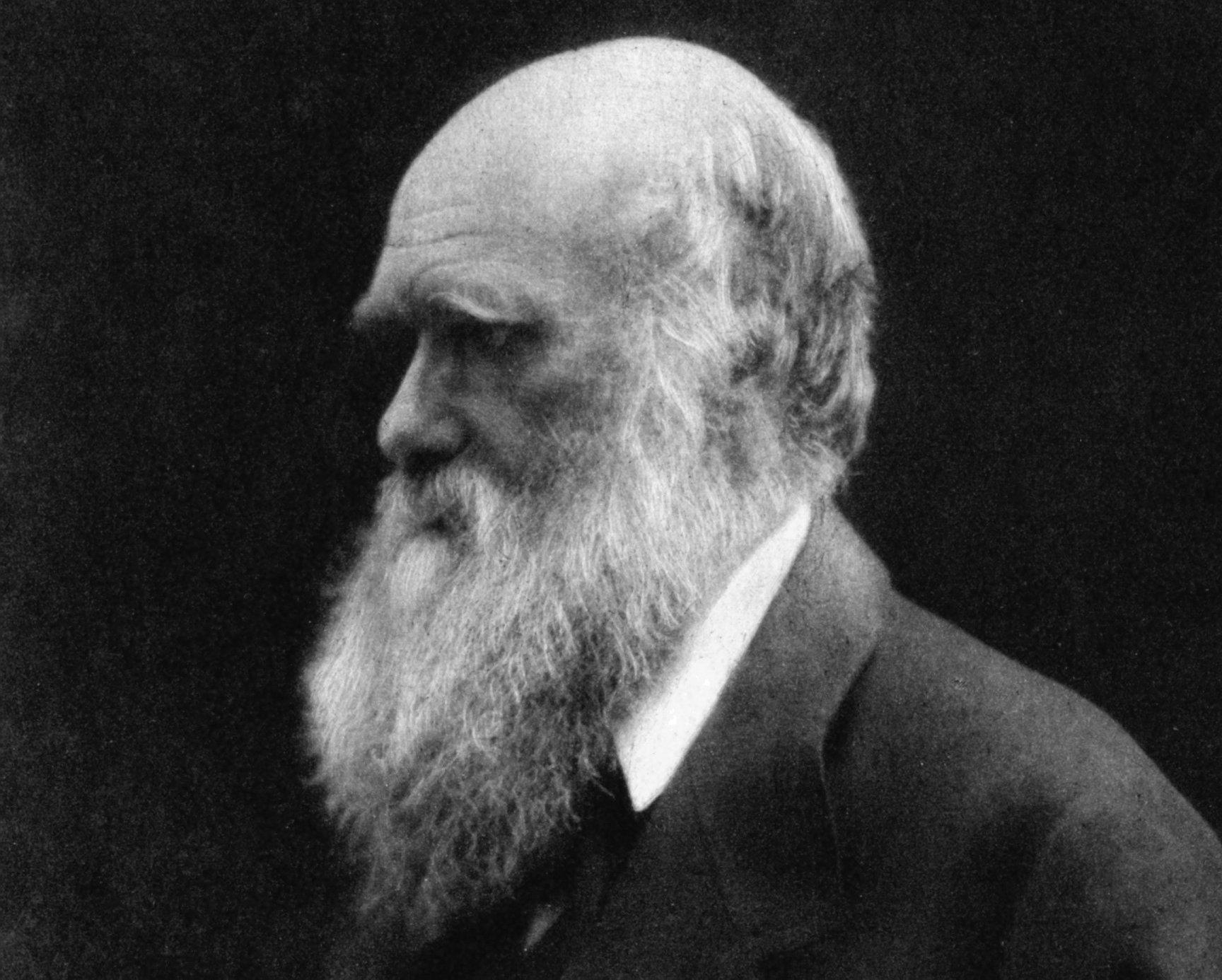 Gezeigt wird ein Foto des britischen Naturforschers Charles Darwin in höherem Alter. Darwin fallen die Ähnlichkeiten zwischen Mensch und Schimpanse auf. Deshalb glaubt er, beide hatten einst einen gemeinsamen Vorfahren gehabt. Und weil die heutigen, nächsten Verwandten des Menschen – die Schimpansen – in Afrika leben, müsse auch der gemeinsame Urahn auf dem Schwarzen Kontinent zu finden sein.