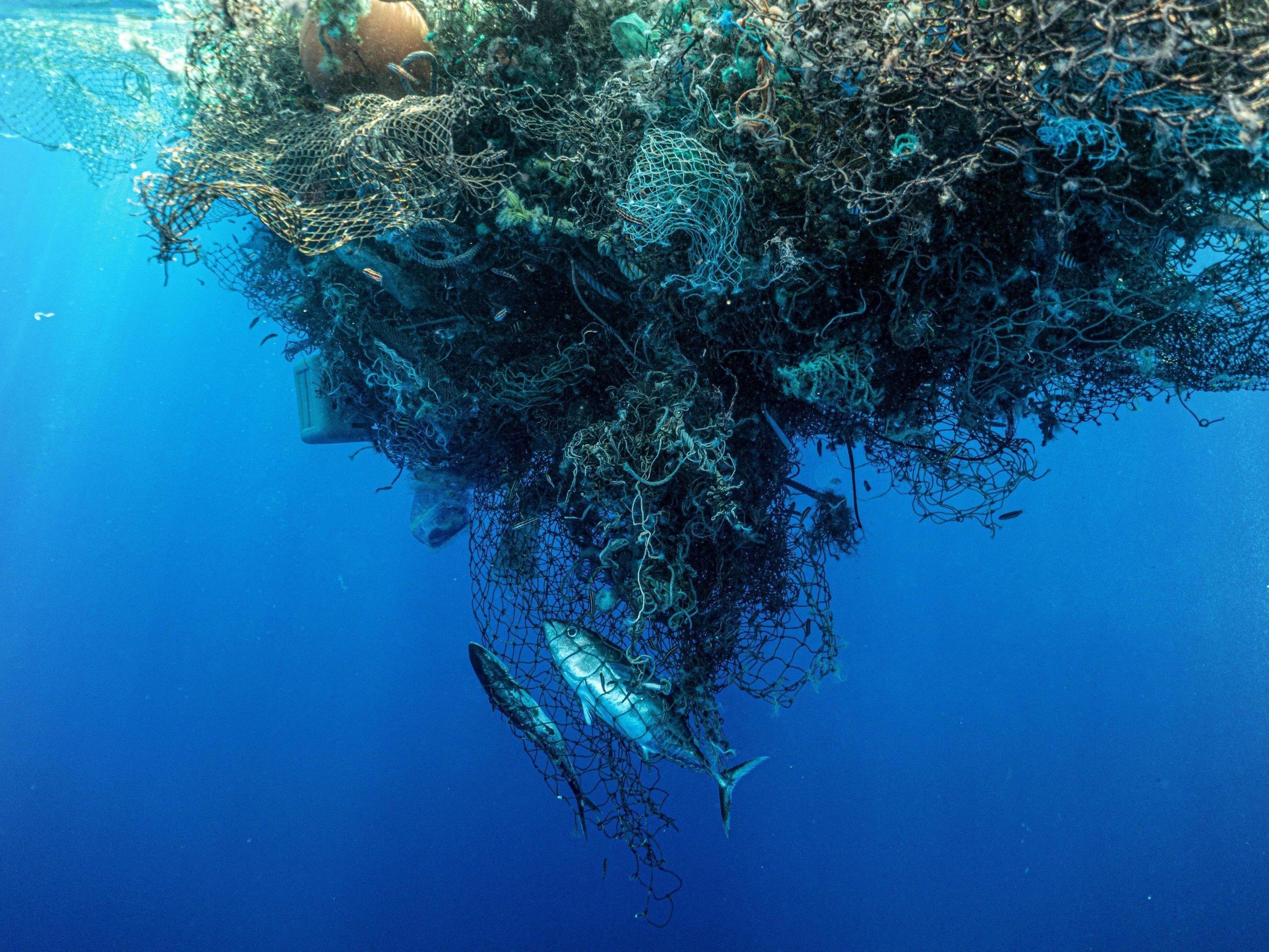 Ein Fischernetz im Wasser mit Fischen darin.