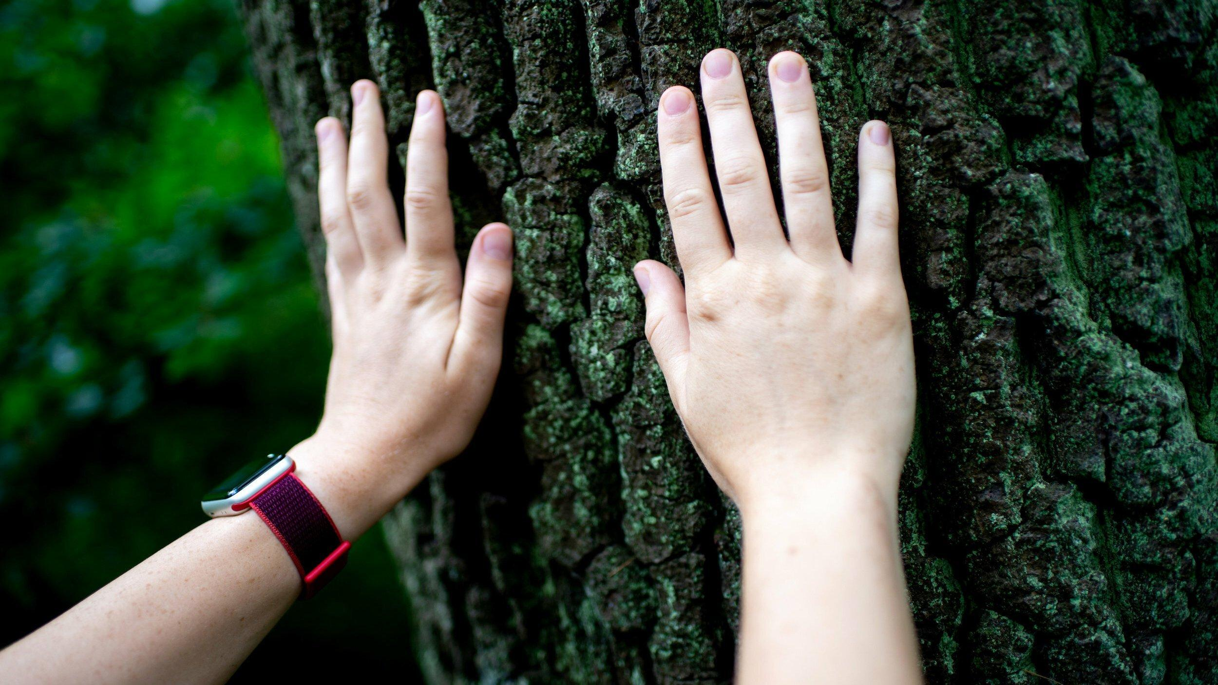 Eine junge Frau erfühlt die Rinde eines Baumes mit ihren Händen.
