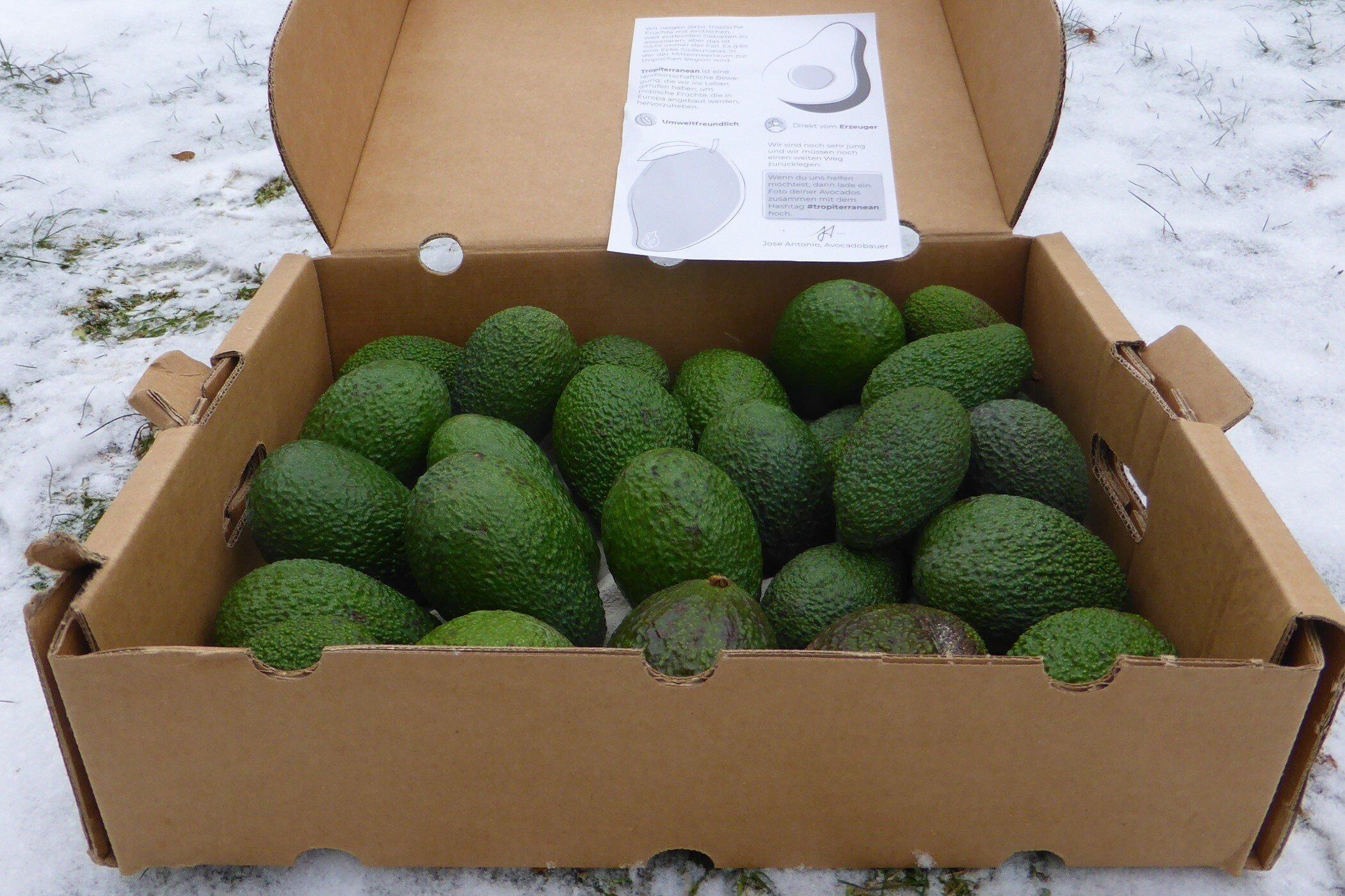 Geöffneter Karton mit vier Kilogramm Avocados auf verschneitem Rasen.