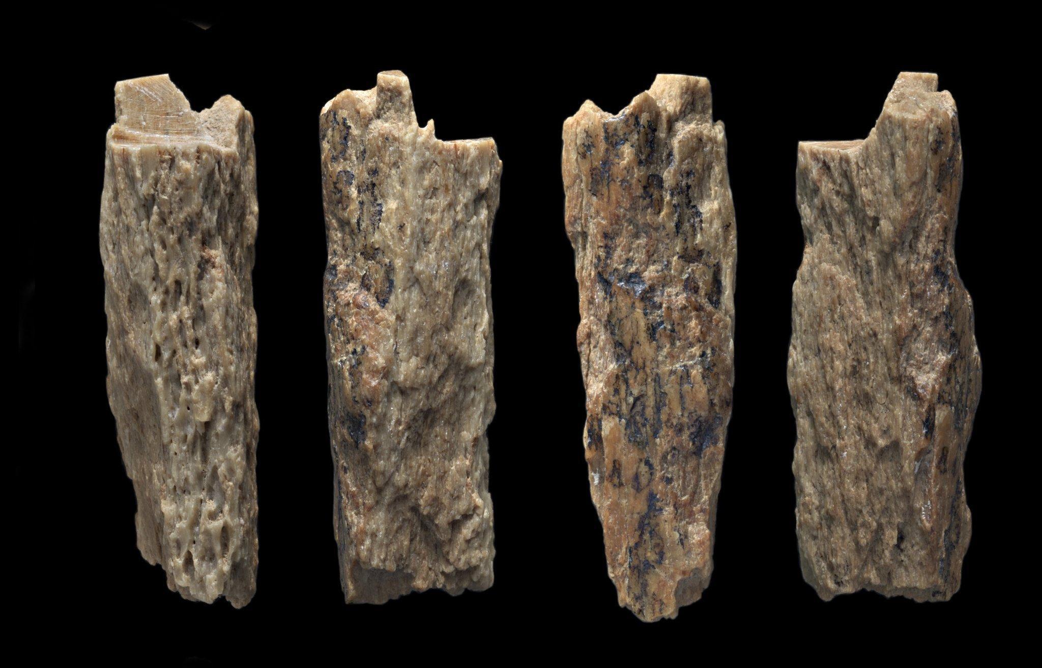 Auf dem Foto wird ein Knochenbruchstück gezeigt, das im Jahr 2012in der Denisova-Höhle gefunden wurde und ein besonderes Geheimnis birgt. Es gehörte einst einer jungen Frau, deren Mutter Neandertalerin und deren Vater Denisova-Mensch war. Das ergab die Analyse ihrer Erbsubstanz.