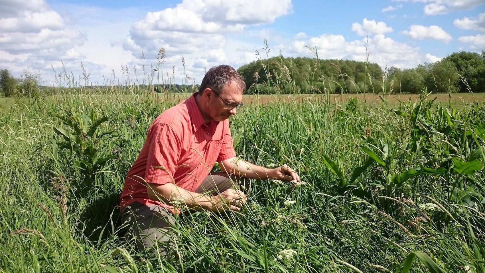 Der Biologe Jens Dauber kniet in einem Feld und schaut sich Gräser an.