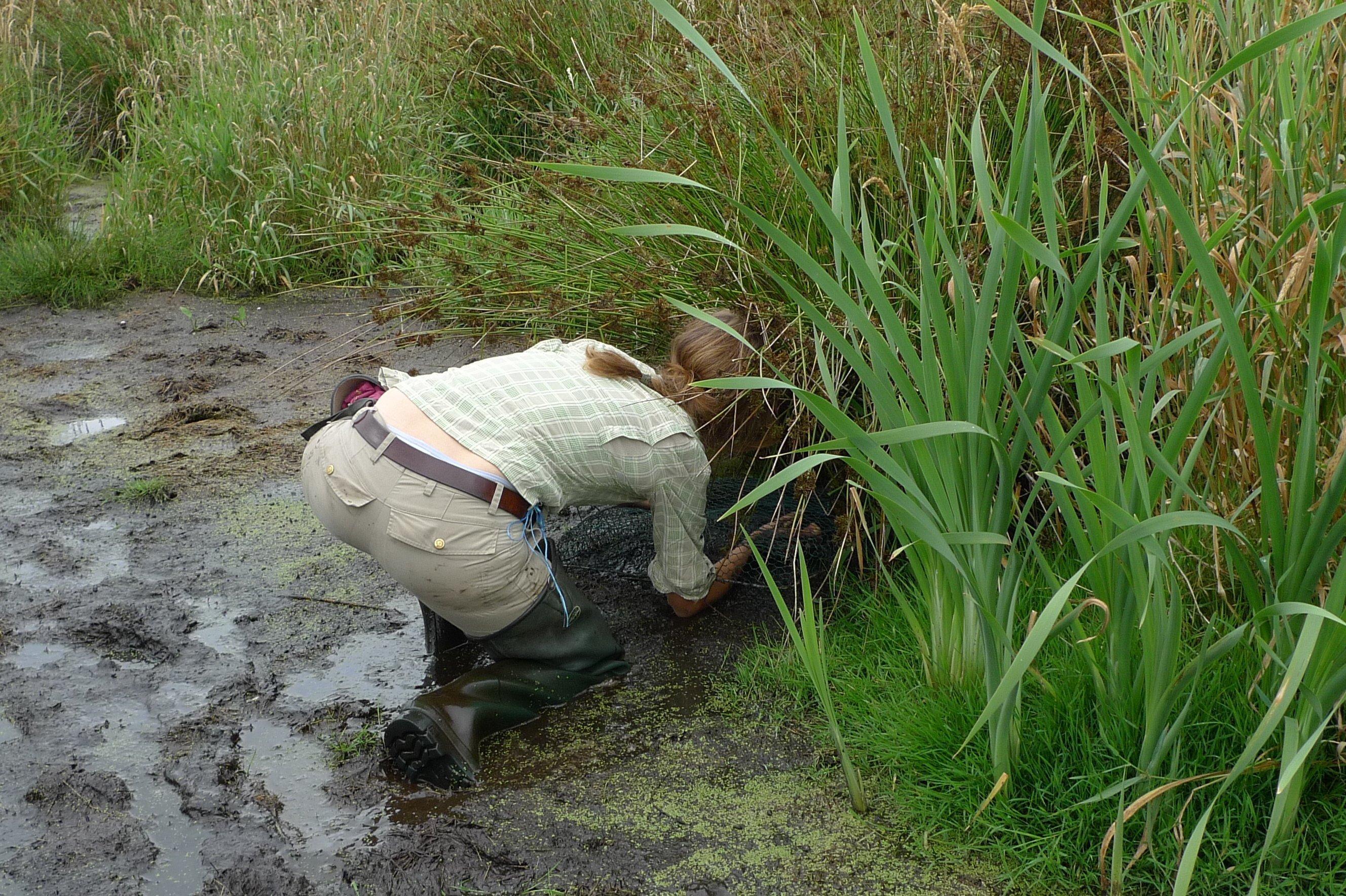 Nina Seifert kniet im Schlick und sucht etwas am Boden.