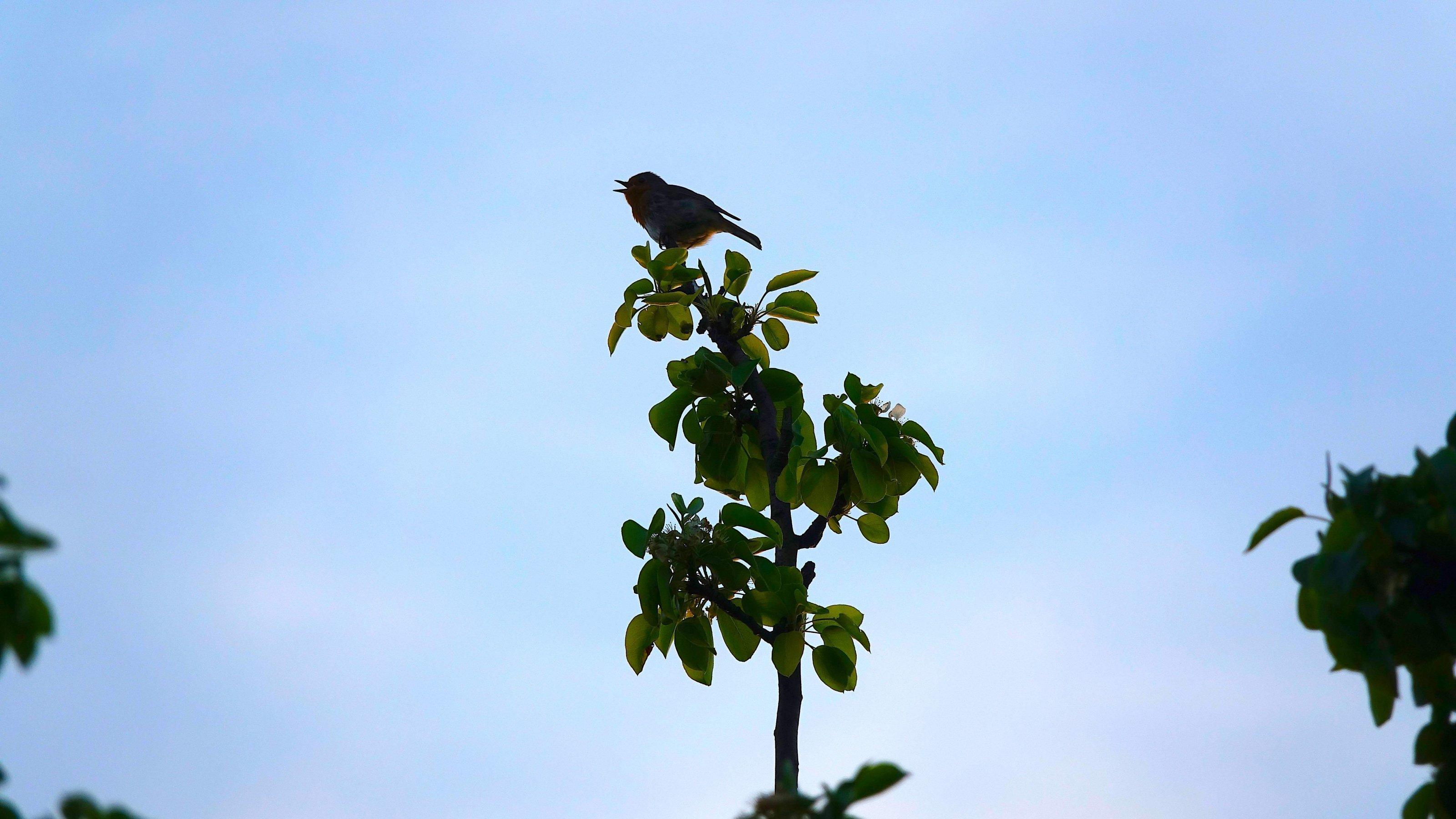 Ein kleiner Vogel sitzt auf der Spitze eines jungen Baumes.