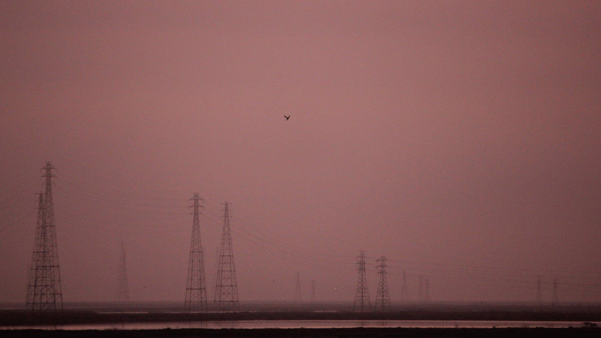 Das Bild zeigt eine in Himmelsrot getauchte Landschaft in der Bucht von San Francisco, unweit des Google-Hauptquartiers. Ein Vogel – ein Weißschwanzgleitaar – schwebt am Himmel über dem Baylands Nature Preserve, im Hintergrund sind Strommasten zu sehen.