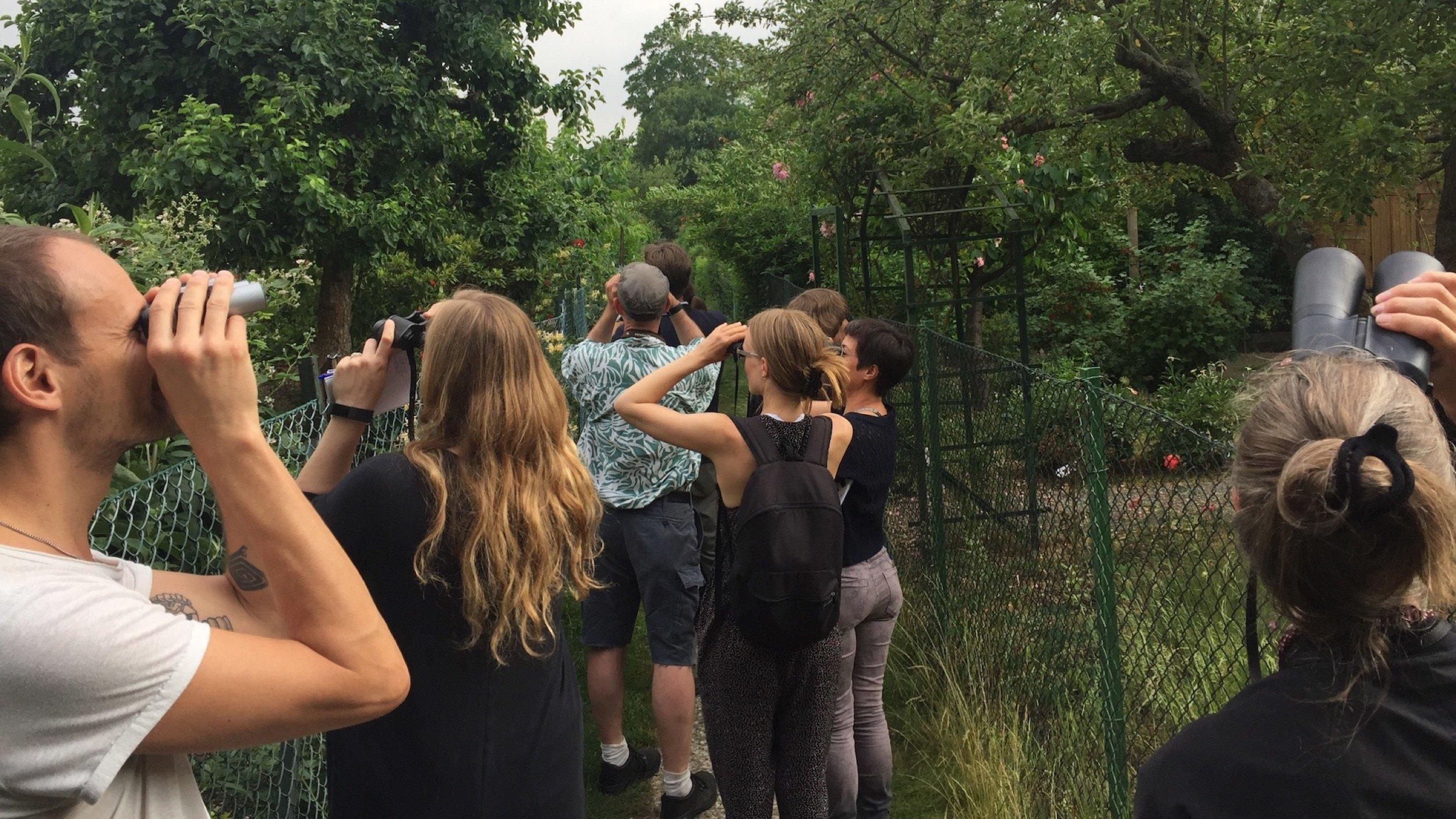Bei einer Vogelexkursion 2018in Berlinen schauen die Teilnehmer mit Ferngläsern in den Himmel.