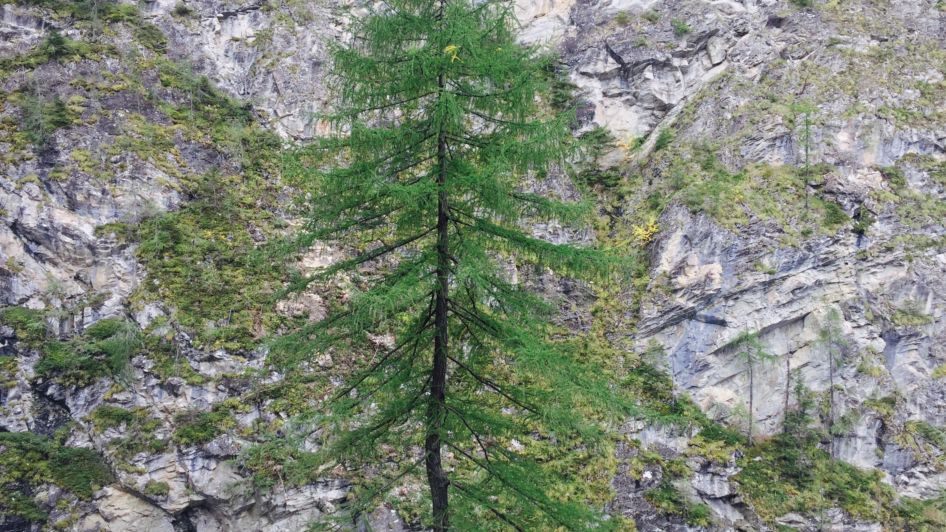 Eine Lerche vor einer Steilwand aus Gestein.
