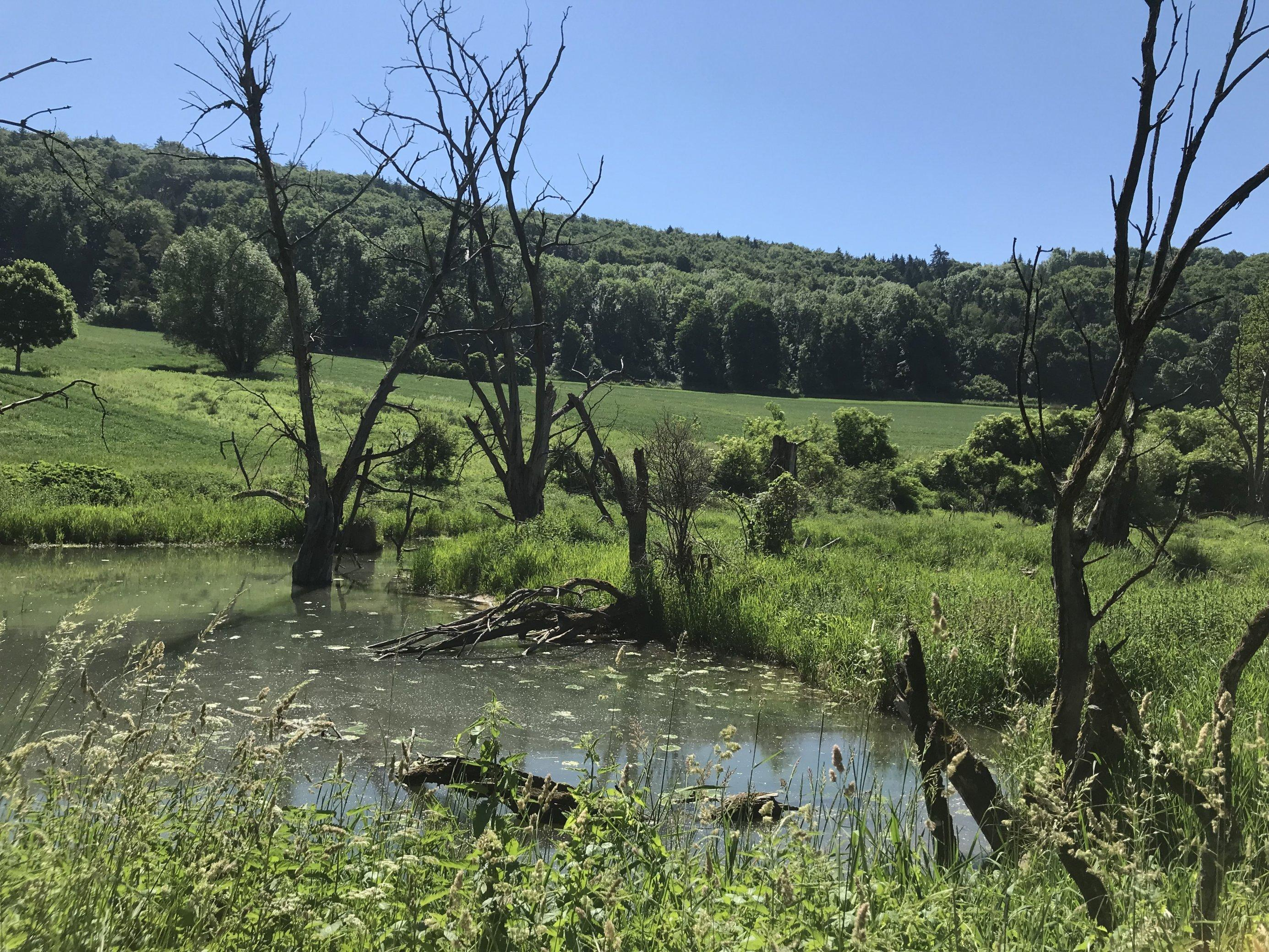 Üppig bewachsenes Flussufer mit toten Bäumen