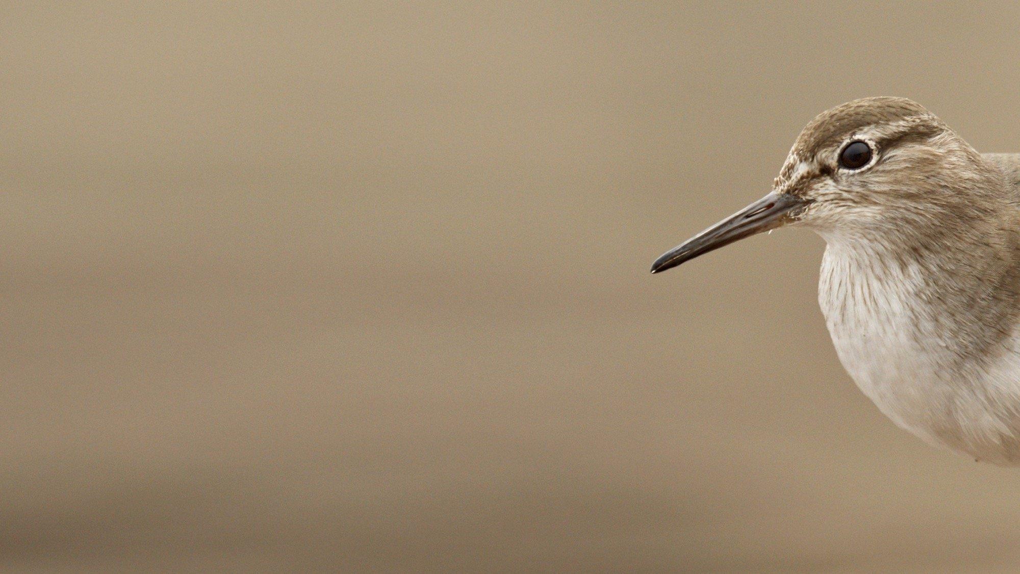 Der Vogel ist an einem Ufer zu sehen, ein typischer Lebensraum für ihn.