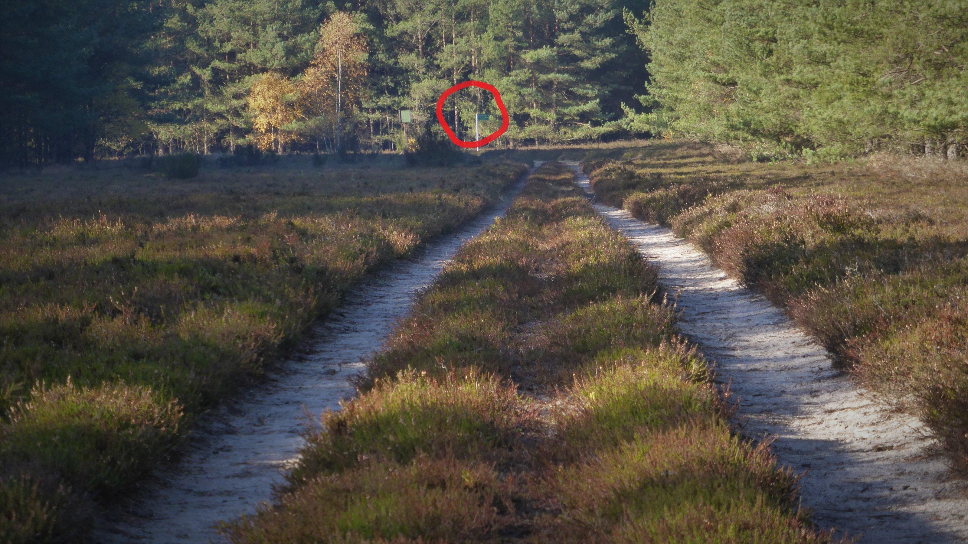 Ein von Heide gesäumter Kolonnenweg führt auf einer länglichen Lichtung auf ein grünes Schild zu, das an einem hellen Stab angebracht ist.
