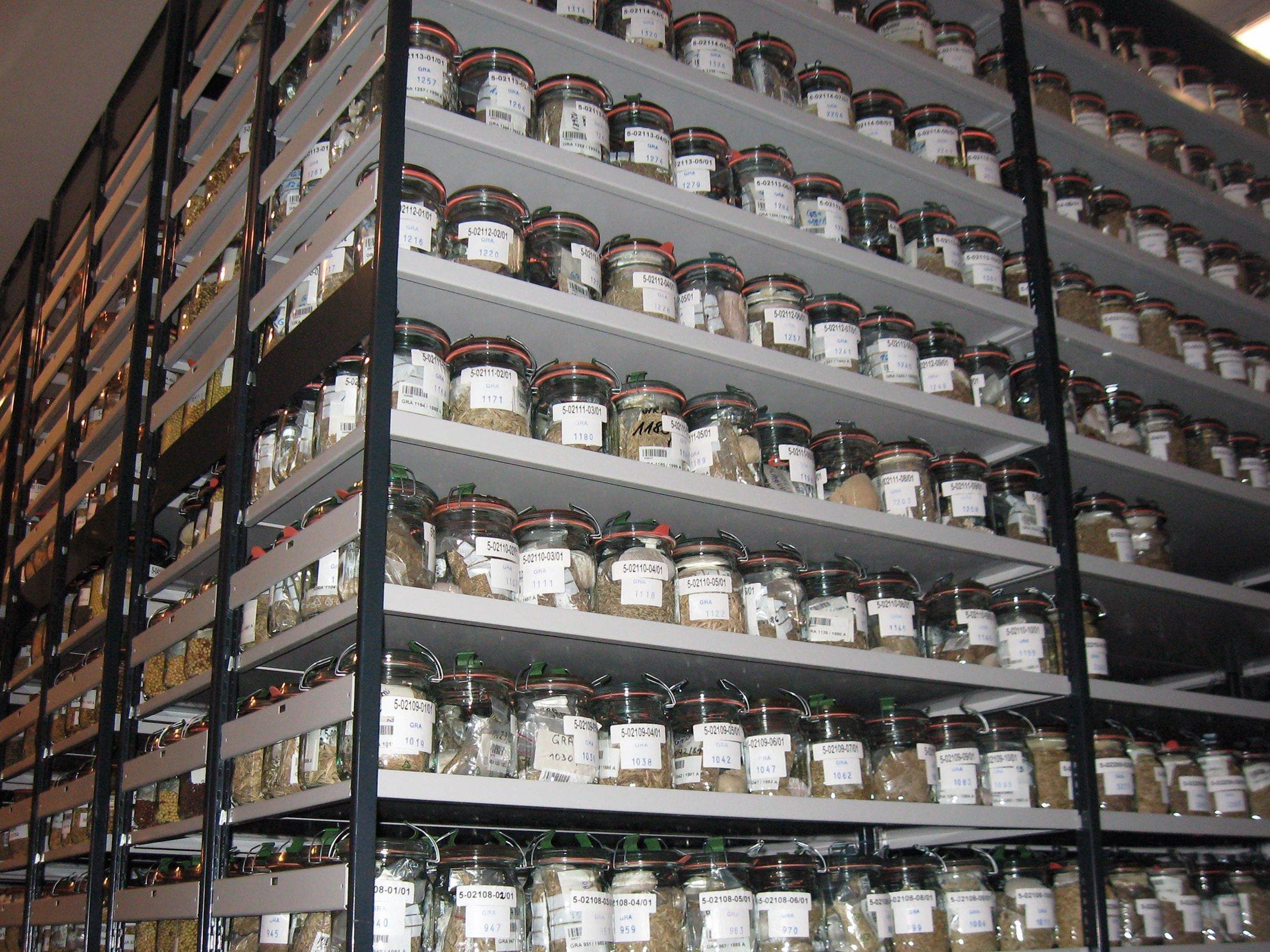 Ein fensterloser Raum steht voller Regale, die vom Boden bis zur Decke  mit verschlossenen Weckgläsern gefüllt sind. Die Gläser enthalten verschiedene Samen. Alle Gläser sind etikettiert und tragen eine zehnstellige Kennnummer.