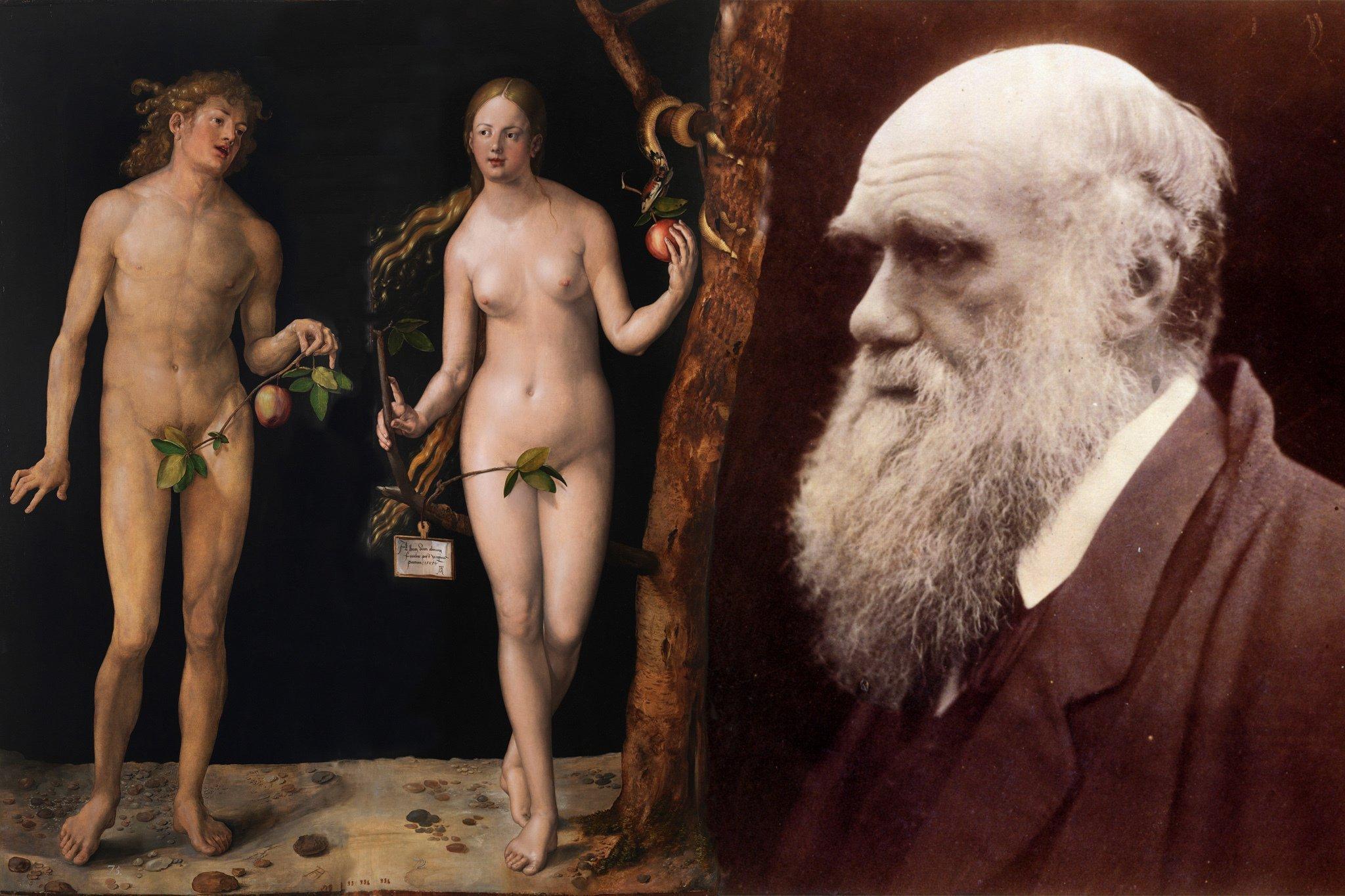 Das Bild zeigt links Darstellungen von Adam und Eva, die Albrecht Dürer im Jahr 1507malte. Die Figuren sind hellhäutig, nackt und die Geschlechtsteile sind von Zweigen bedeckt. Eva hält einen Apfel in der Hand und im Baum neben ihr lauert eine Schlange. Laut Bibel schuf Gott die beiden ersten Menschen. Charles Darwin, dessen Foto als älterer Mann mit Glatze und üppigem, weißen Bart auf der rechten Seite dieser Collage zu sehen ist, war sich dagegen sicher, dass die Evolution den Menschen in einem langwierigen Prozess hervorgebracht hat.