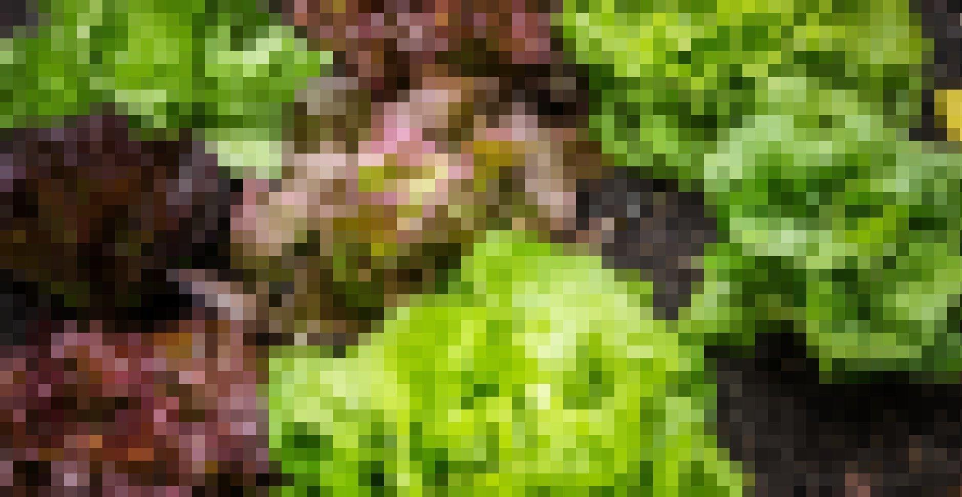 Verschiedene Arten von Blattsalat.