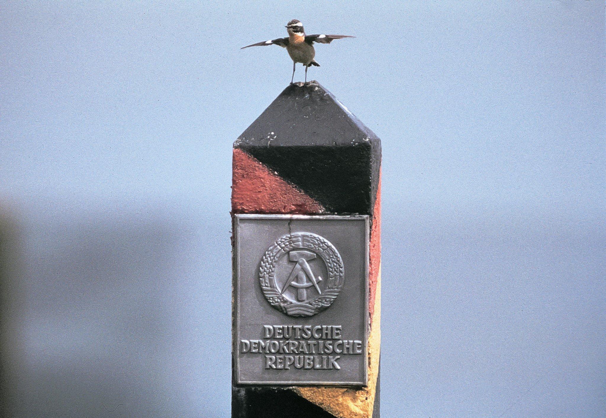Ein Braunkehlchen auf einem DDR-Grenzpfahl.