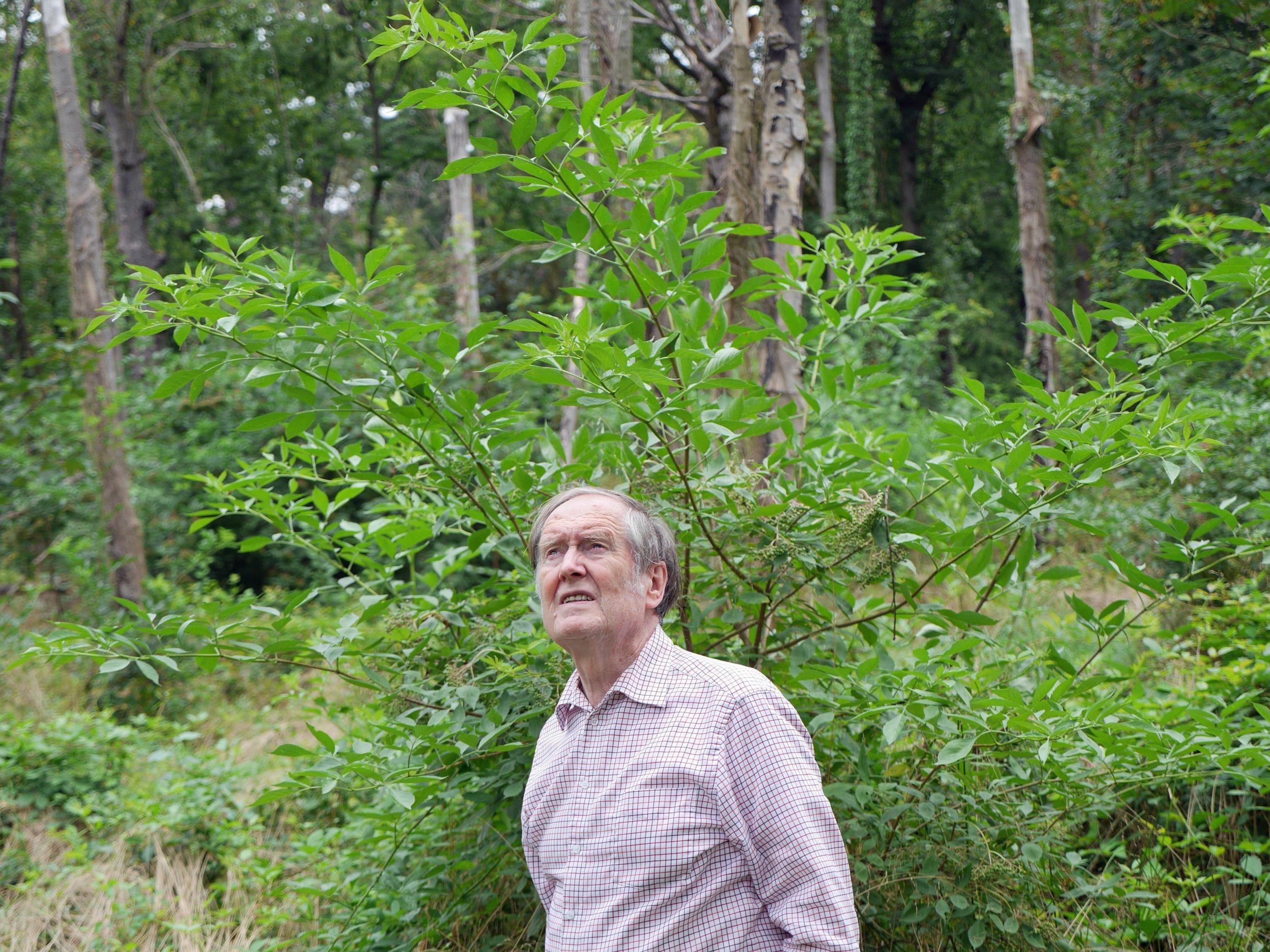 Mann steht vor toten Bäumen im Wald und blickt nach oben