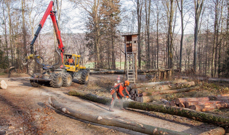 Ein Waldarbeiter zersägt Bäume, im Hintergrund steht eine Forstmaschine.