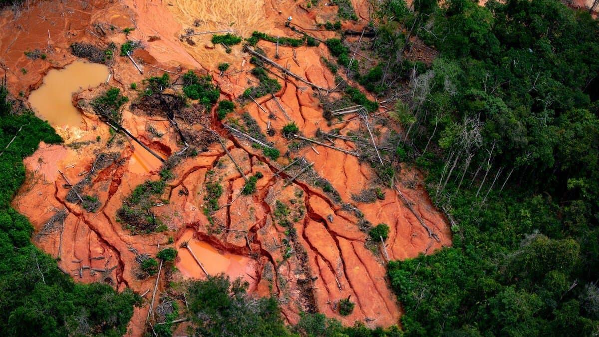 Luftaufnahme von verwüstetem Wald auf dem Gebiet der Yanomami im Bundesstaat Roraima im April 2021