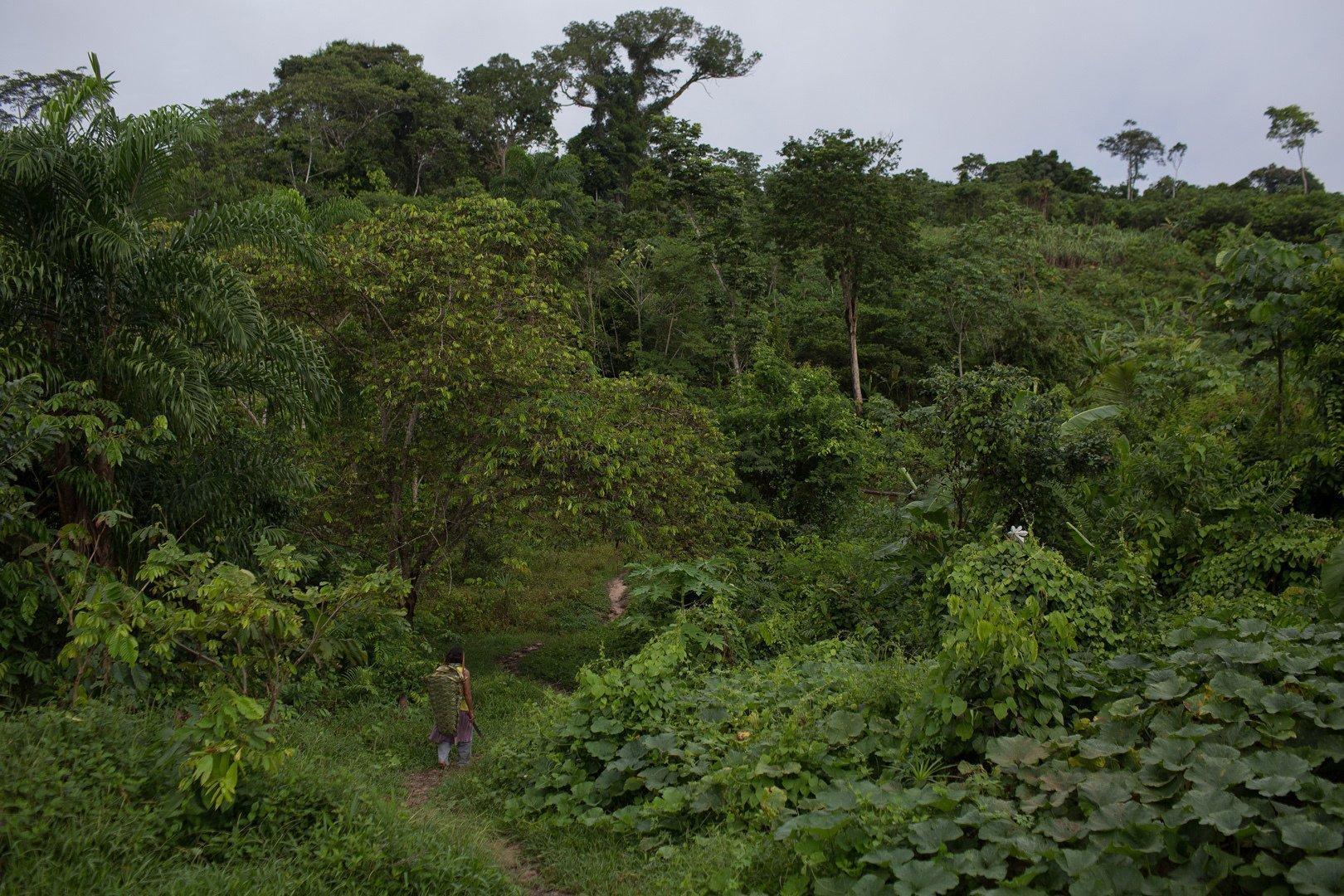 Urwald, der bei genauerem Hinsehen ein Garten ist mit den verschiedensten Pflanzen und Obstbäumen am Itacoai-Fluss, im indigenen Schutzgebiet Vale do Javari.