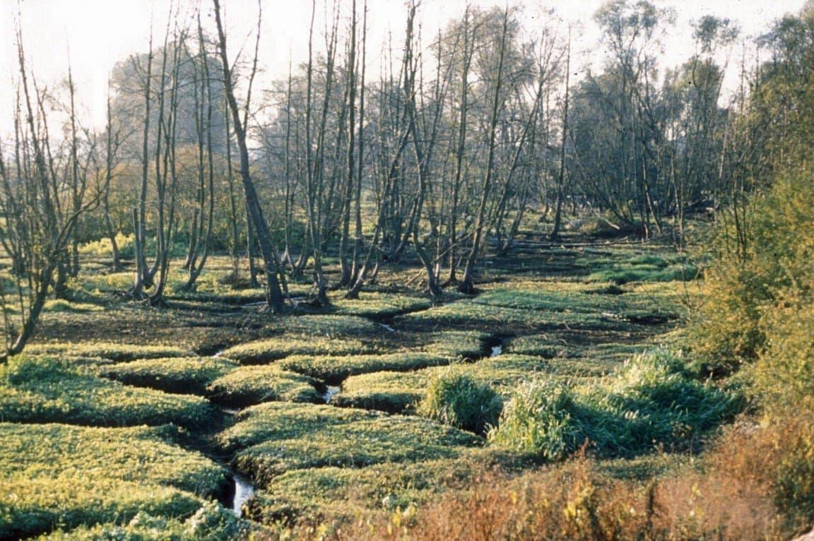 Grüne Erdpolster und tote Bäume in einem ausgetrockneten Moor
