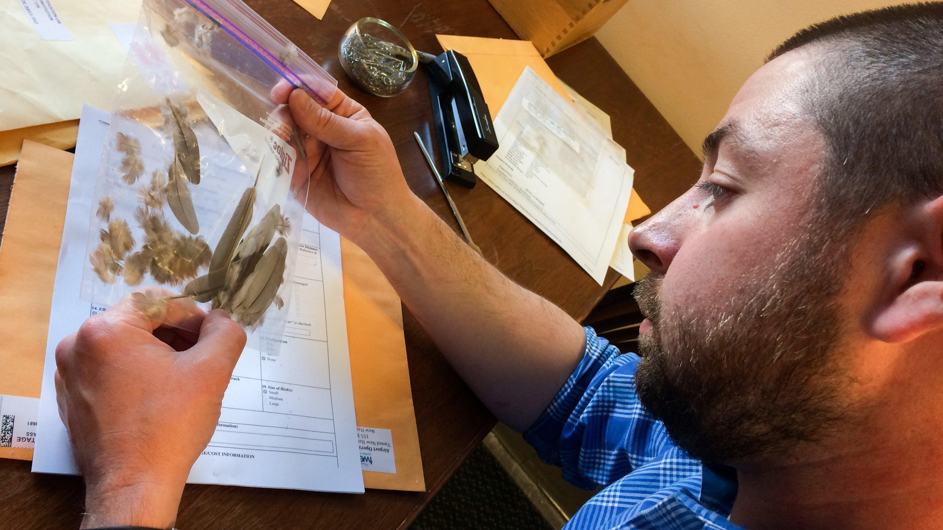 Jim Whatton betrachtet einen Plastikbeutel mit Federn. Die größten sind grau, kleinere braun und rosa.