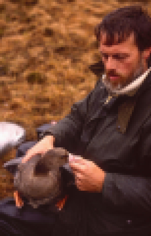 1989 – Johan Mooij mit einer Blessgans auf dem Schoß.