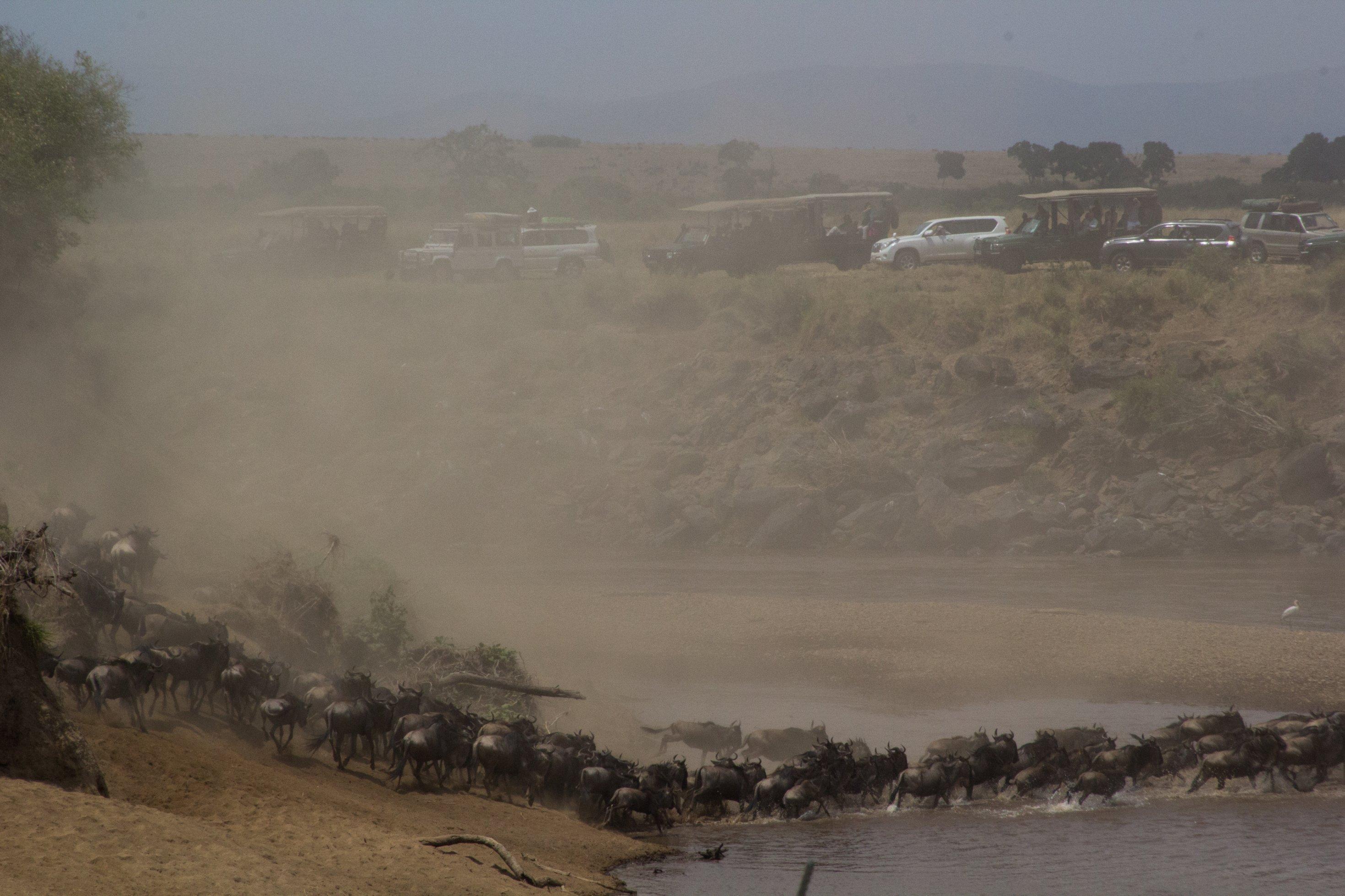 Zu sehen sind die dicht gedrängten Gnus im und am Fluss. Die Ufer sind sehr steil. Oben auf dem Steilhang stehen etliche Geländewagen mit Touristen.