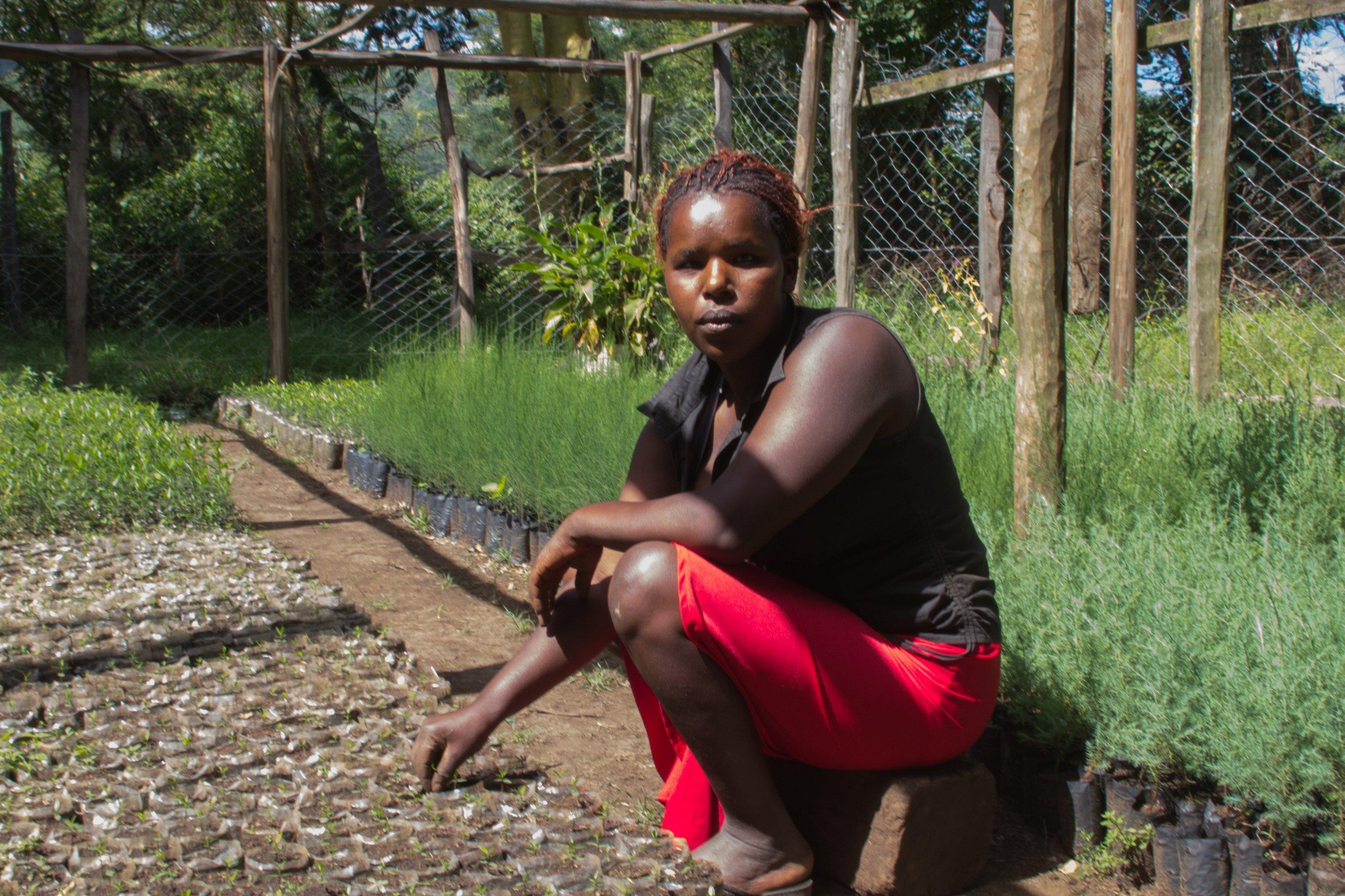 Eine junge Frau in rotem Rock hockt zwischen Setzlingen in einer. Baumschule.