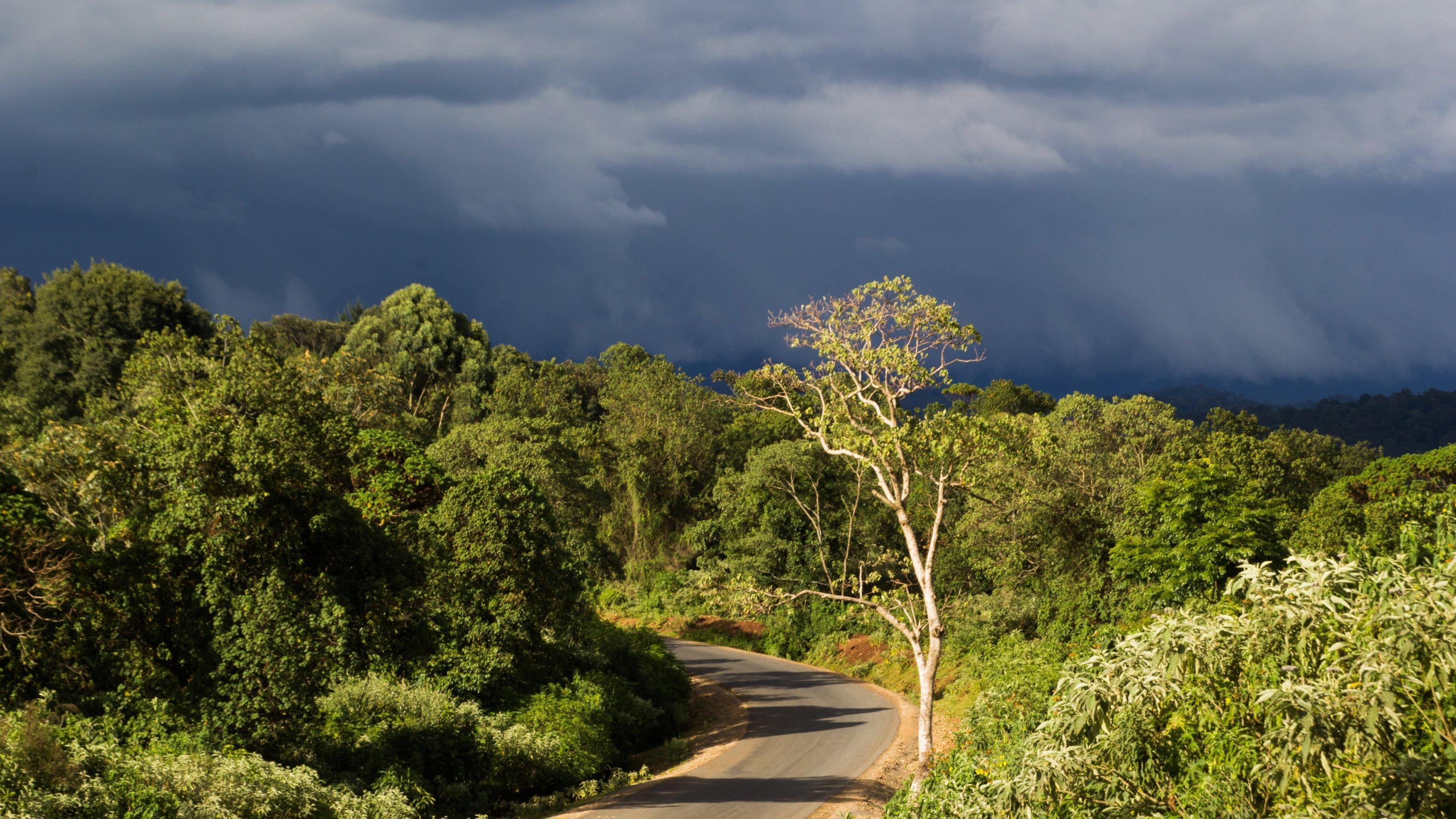 Eine asphaltierte Straße führt in dichten Wald, die Sonne steht noch auf Bäumen im Vordergrund. Hinten ziehen schwere Gewitterwolken auf.