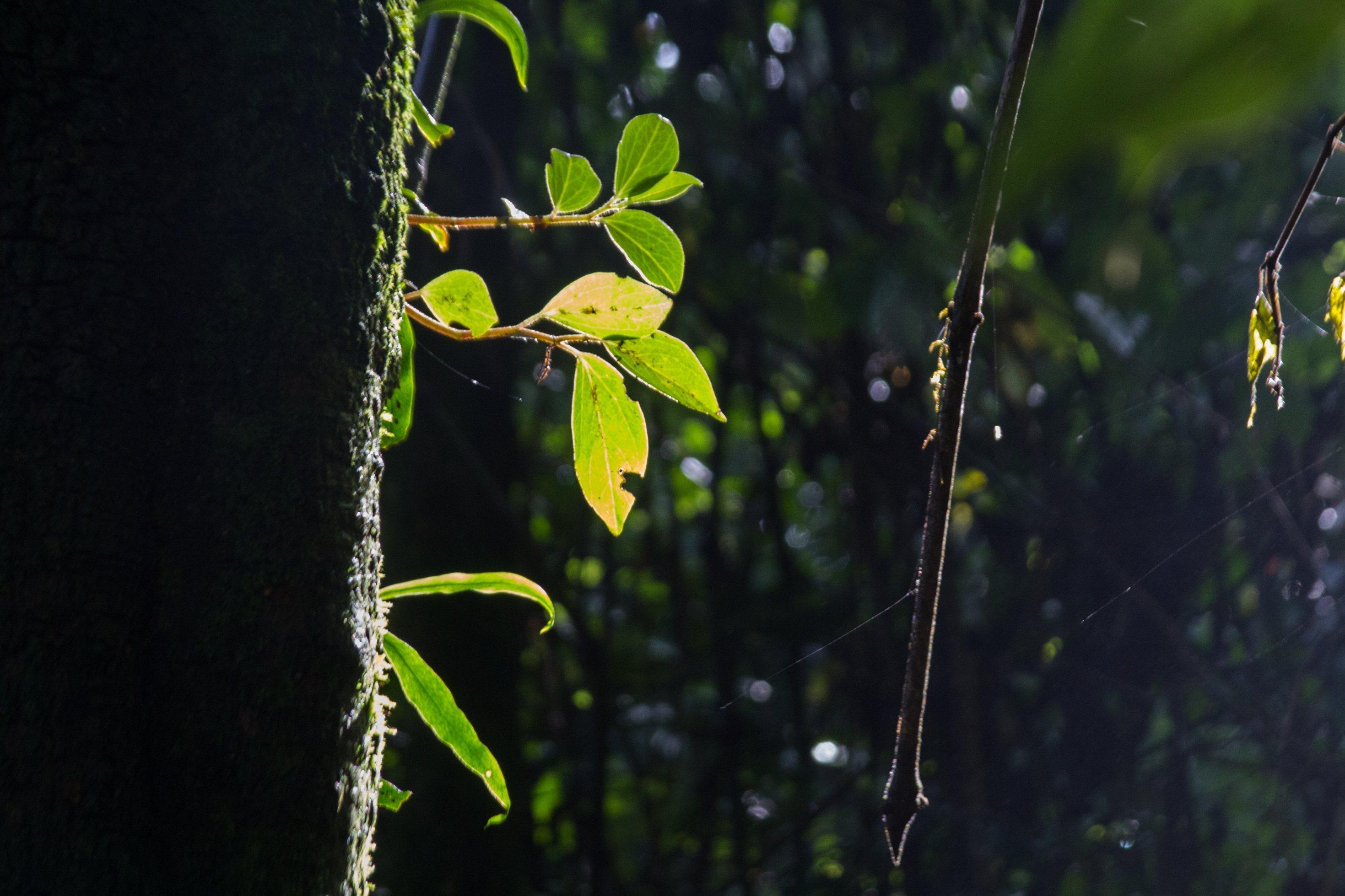 An einem bemoosten Baumstamm schlägt ein Trieb aus, er steht im vollen Sonnenlicht.