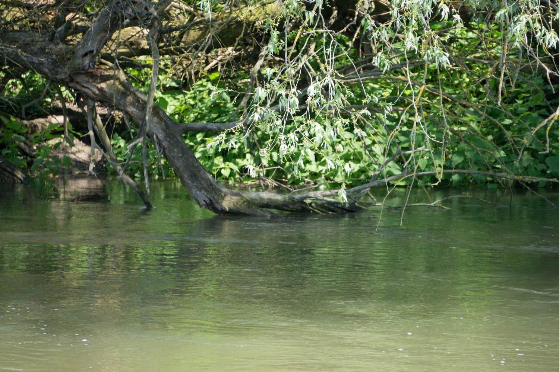 Fluss mit hineinhängendem Ast