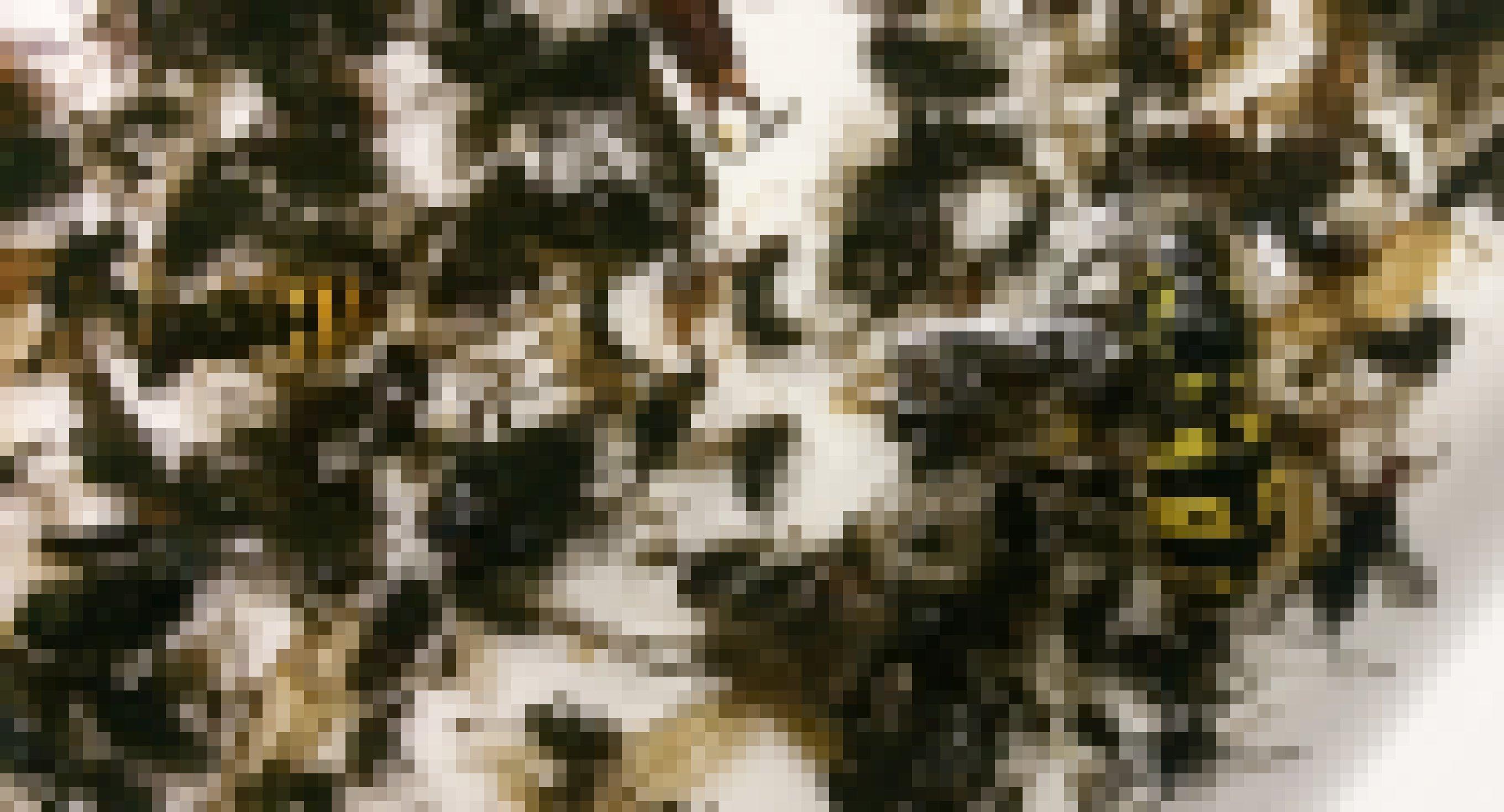 Hunderte Insekten liegen in einer flachen weißen Schale in Alkohol. Einzelne – wie eine Wespe – sind mit bloßem Auge zu erkennen.