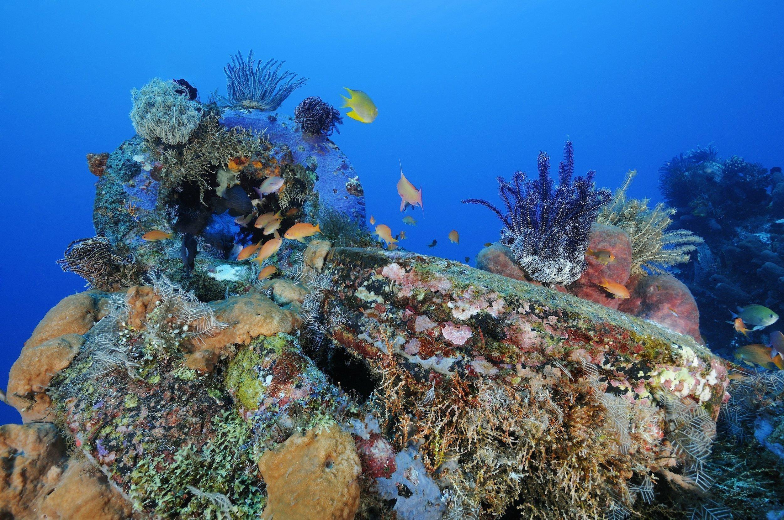 Fische, Korallen und andere bunte Tiere und Pflanzen haben ein künstliches Riff aus alten Autoreifen auf Bali, Indonesien, bewachsen. Die Reifen sind nur noch schemenhaft zu erkennen.