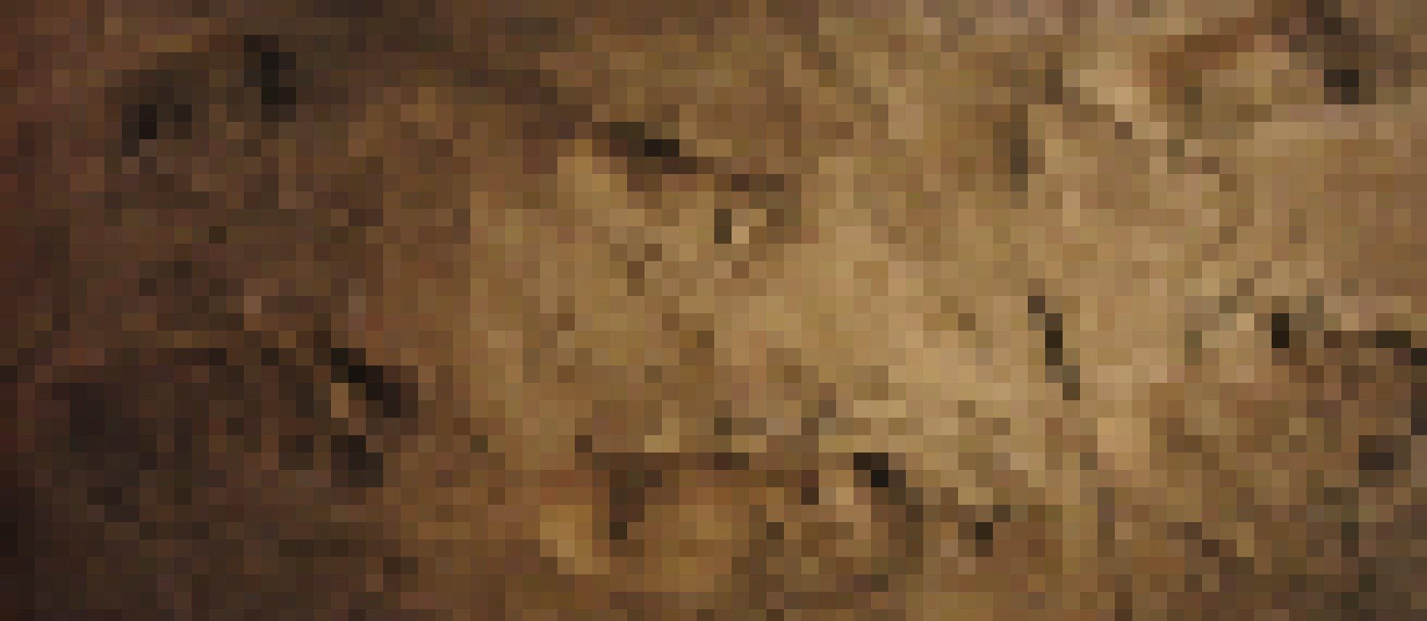 Zu sehen sind eingedrückte Fußspuren auf einem braunen Untergrund. Es handelt sich um die 3,6Millionen Jahre alten versteinerten Fußabdrücke von Vormenschen der Art Australopithecus afarensis – hier als Nachbildung des nationalen Museums für Natur und Wissenschaft in Tokio. Die in vulkanischer Asche hinterlassenen Spuren beweisen, dass die Vormenschen bereits auf zwei Beinen liefen.