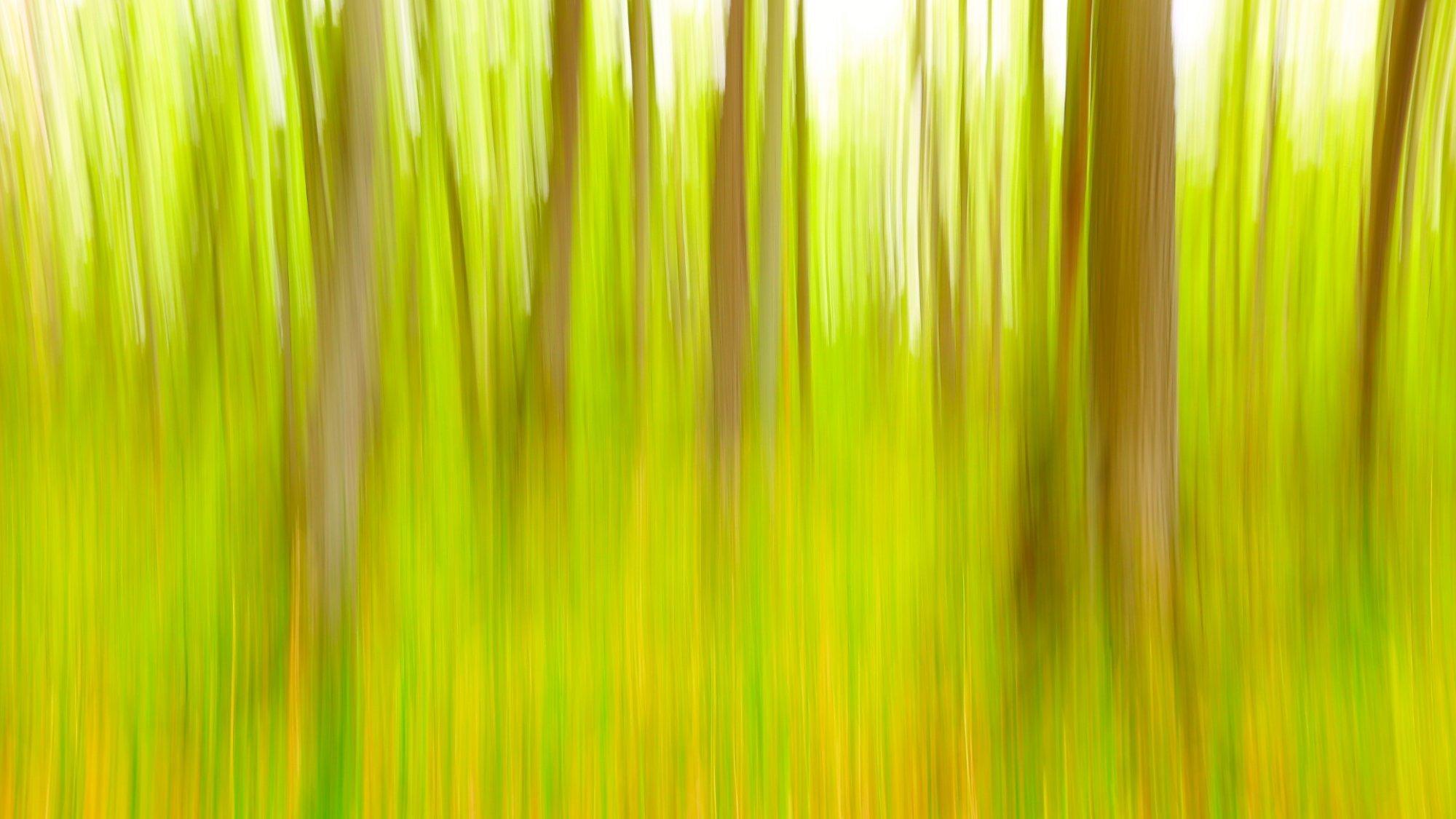 Ein Erlenbruch in abstrakter Fotografie, hellgrün leuchtend