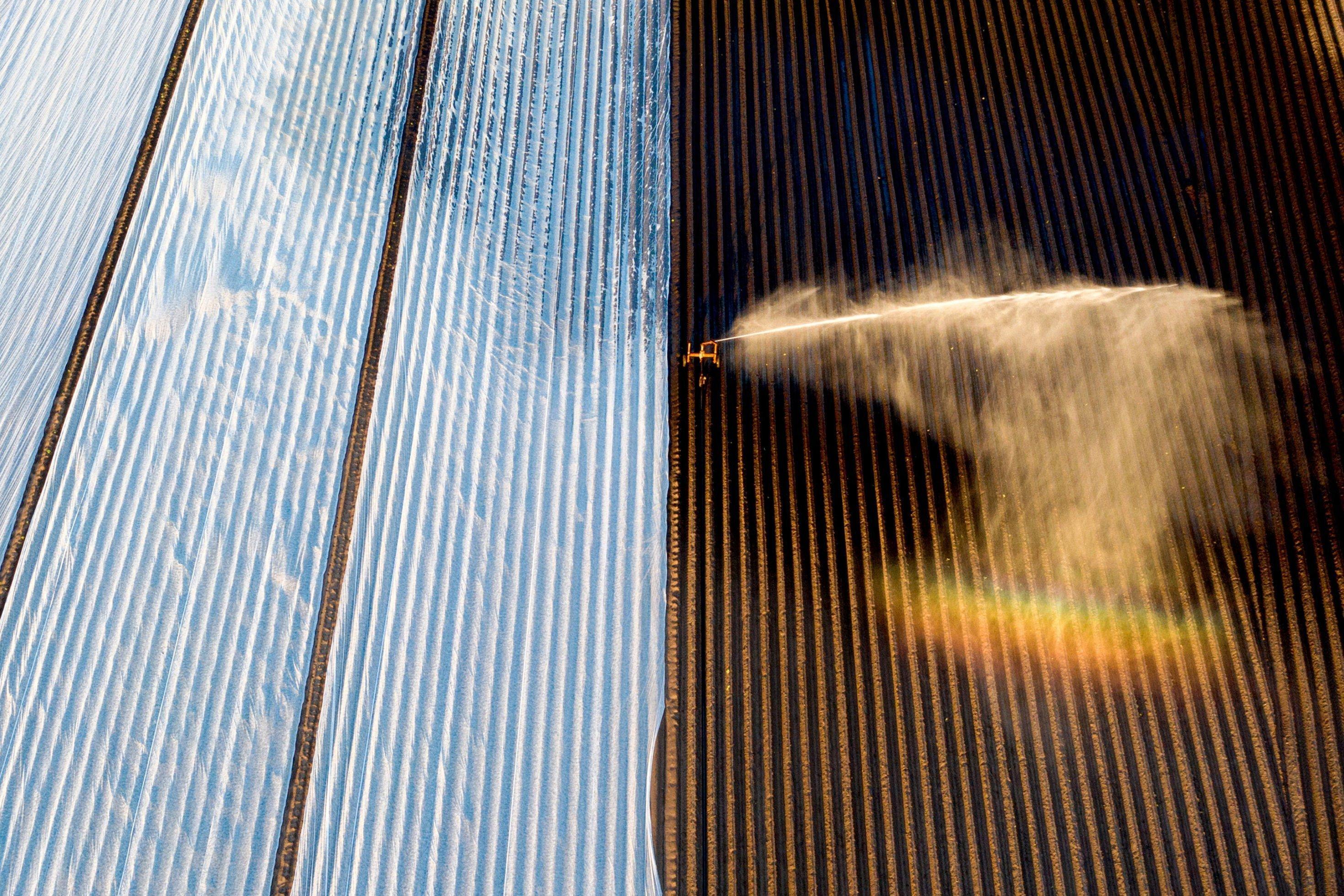 Eine Beregnungsanlage schießt im hohen Bogen einen Wasserstrahl auf einen Acker. Dabei entsteht ein Regenbogen.