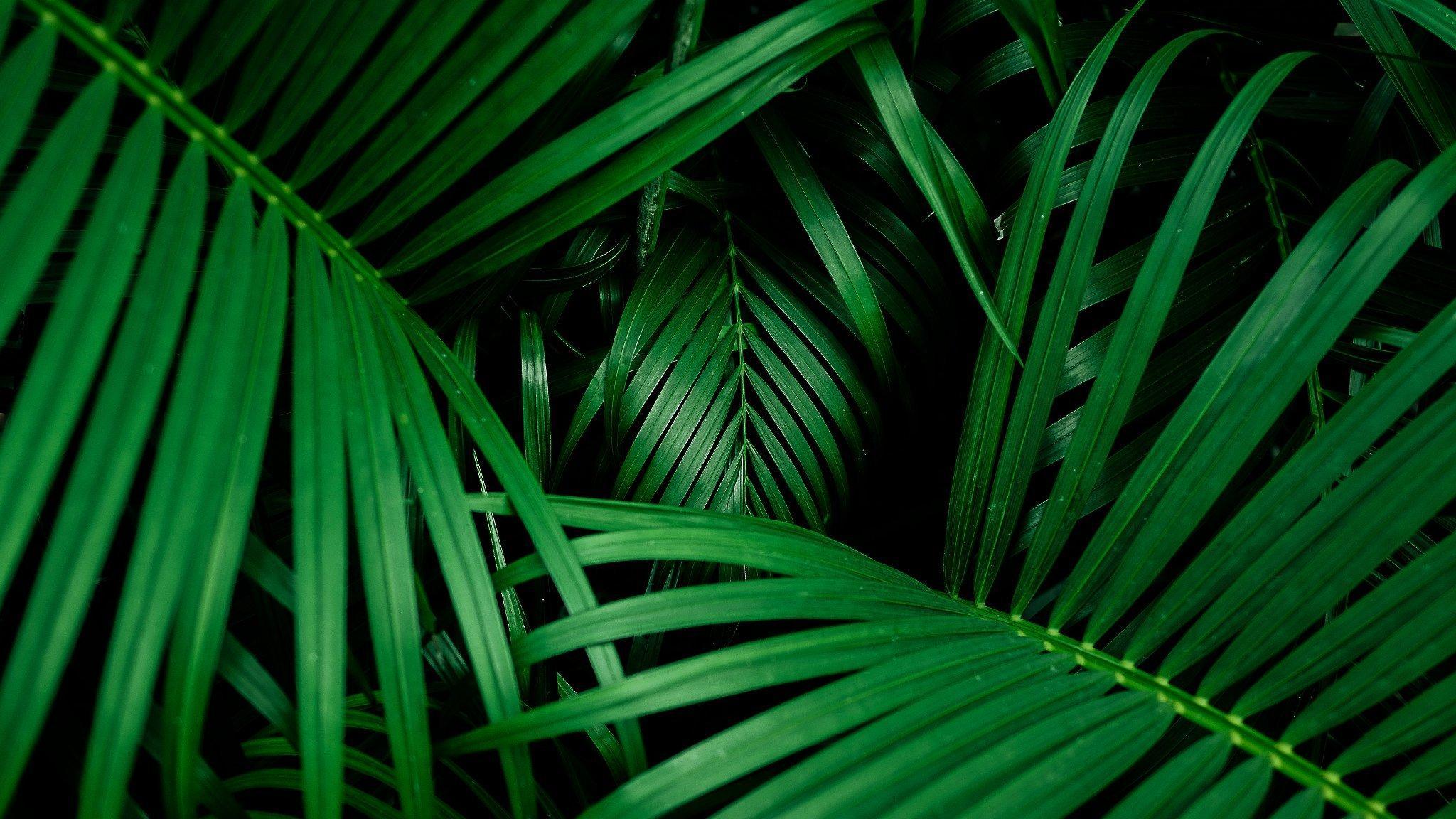 Bild von Schilfpflanzen